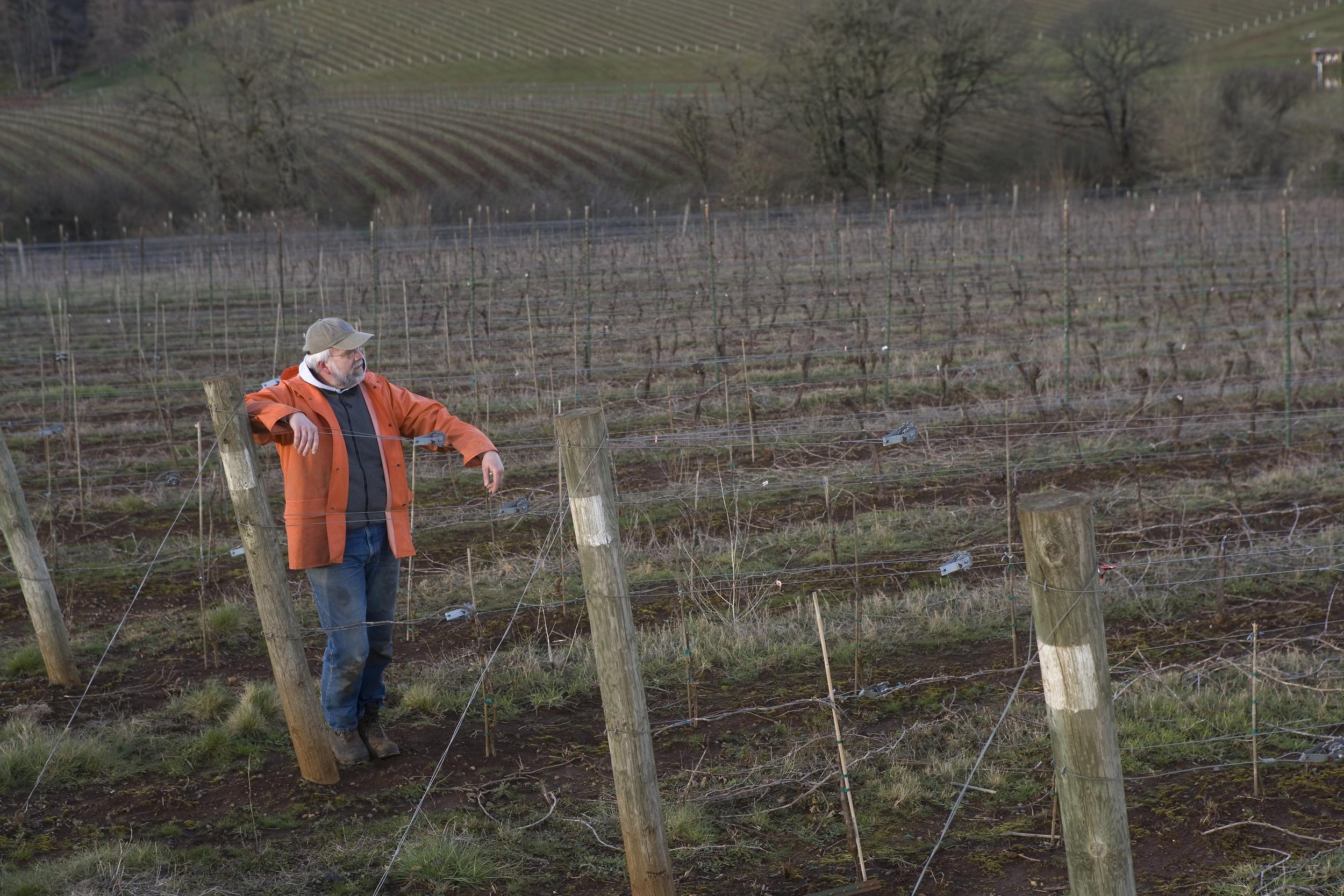 Jerry in vineyard.jpg