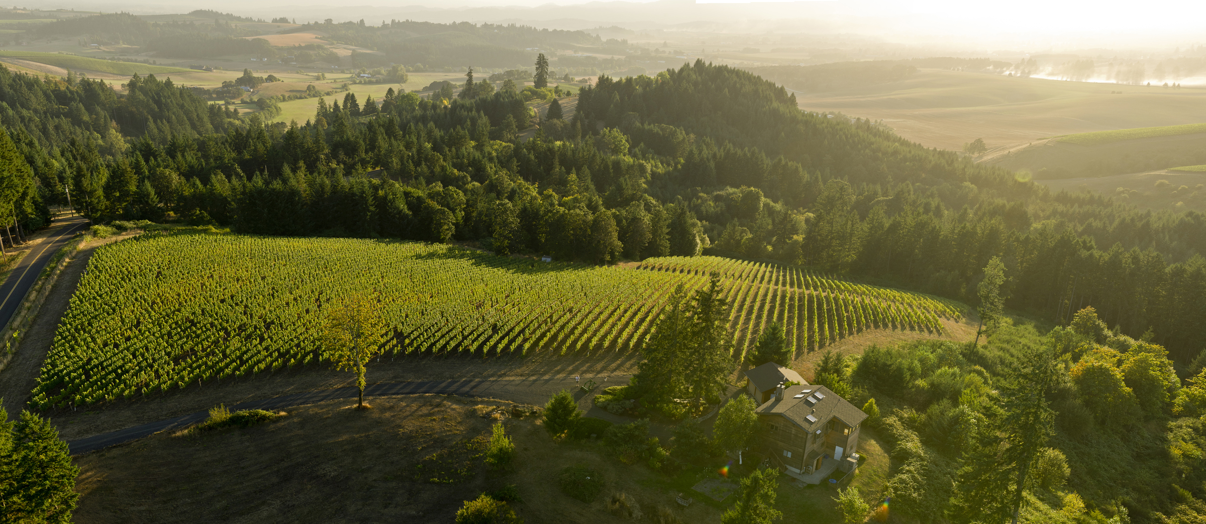 GLORIOUS TO VIEW: An aerial view of Hilary and Chris Berg's vineyard in Yamhill, Oregon, in the Willamette Valley.  Photo courtesy of Andrea Johnson.