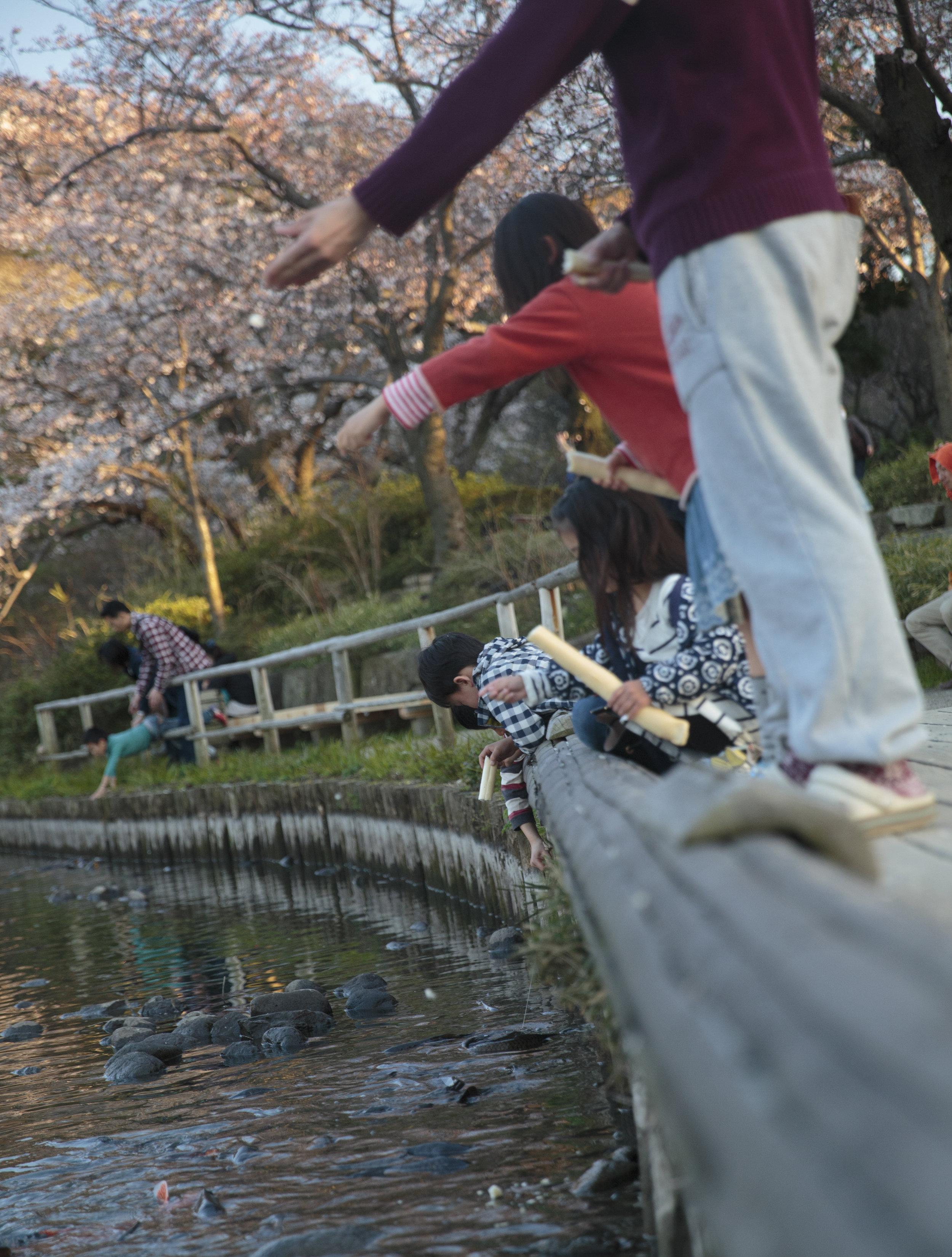 kids-cherry-blossoms.jpg