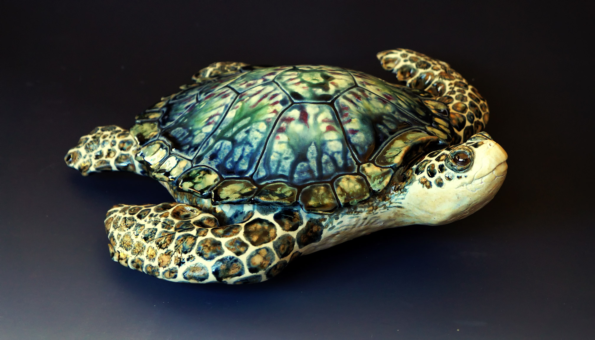 Small Full Turtle, 13 inches long.