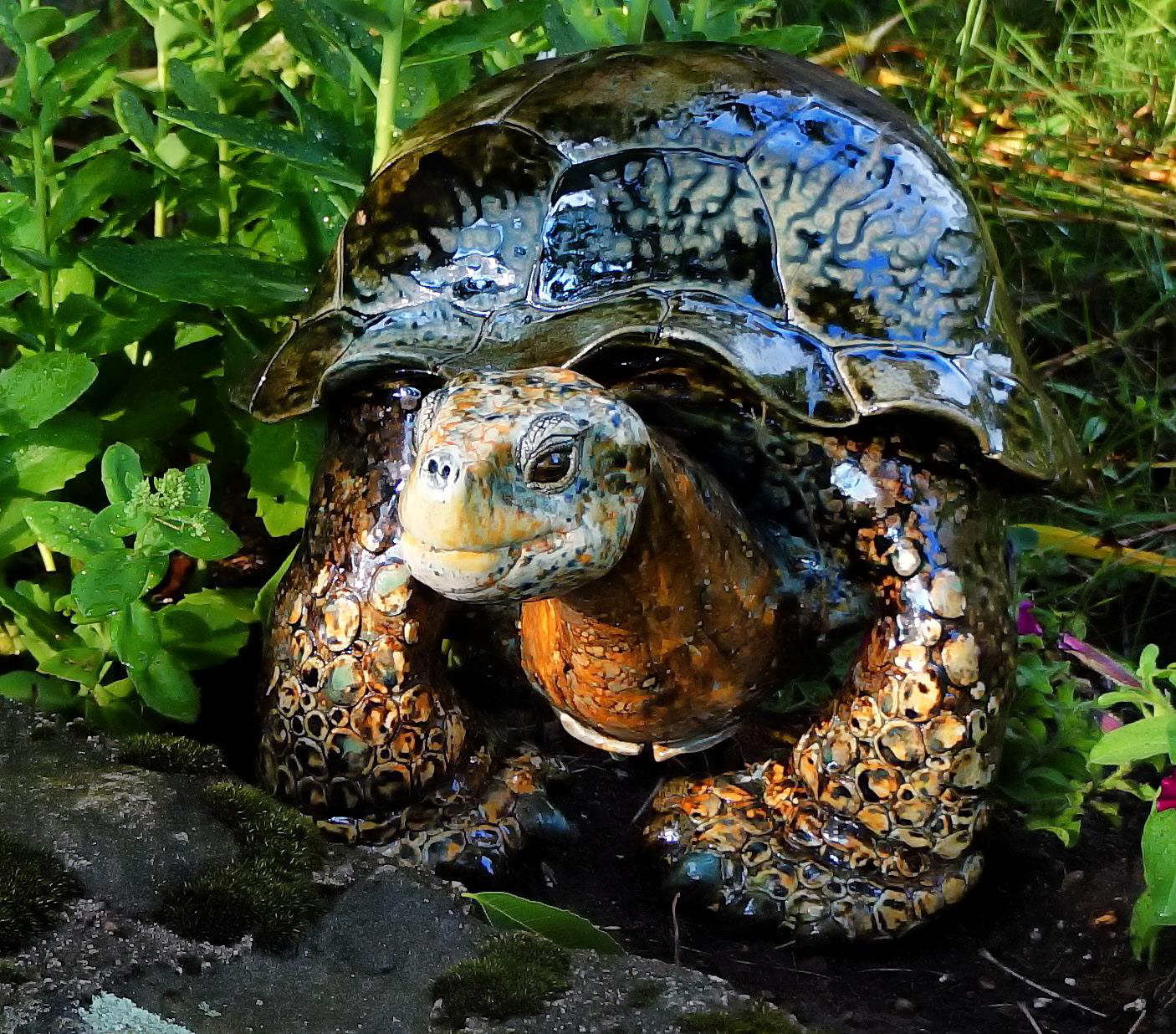 """""""Jacinto"""", Wall hanging Galapagos Tortoise, 14 inches wide."""