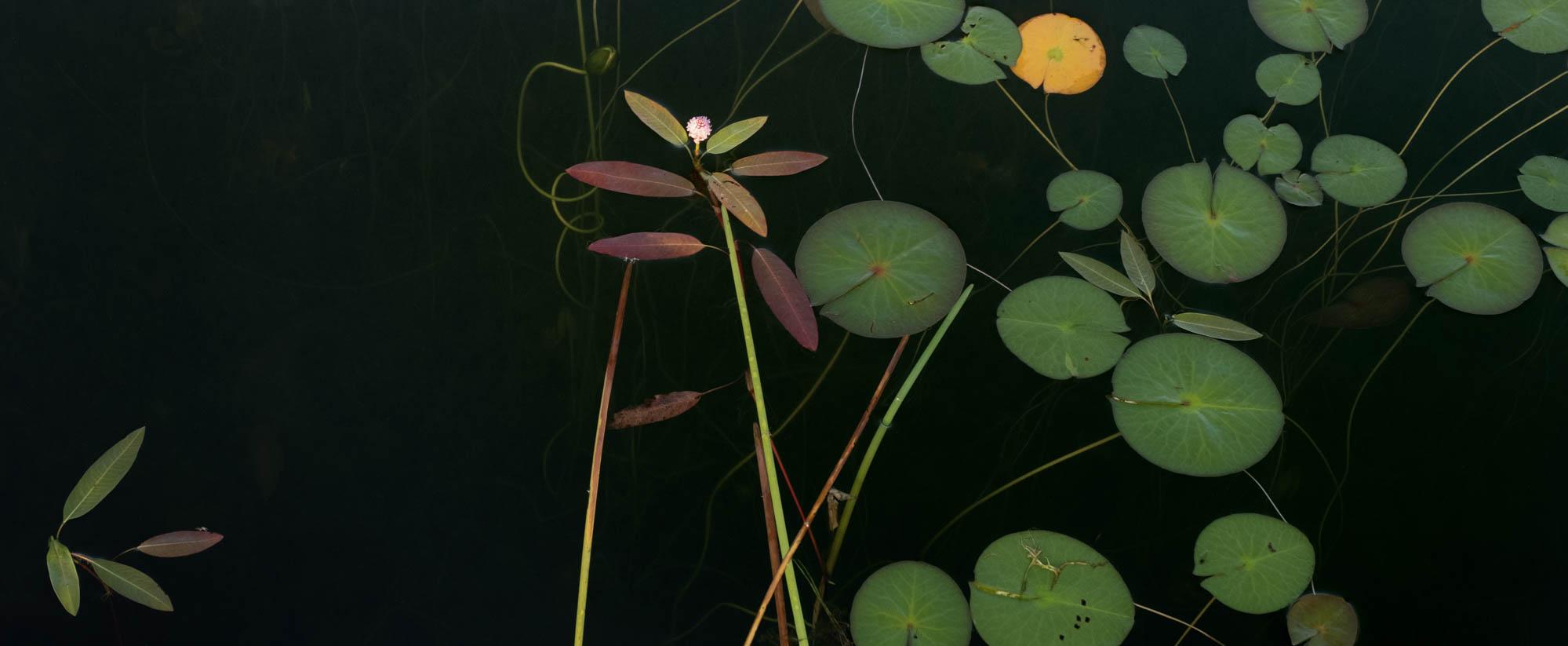 Composition No.3Jane Fulton Alt_ Water Lilies.jpg