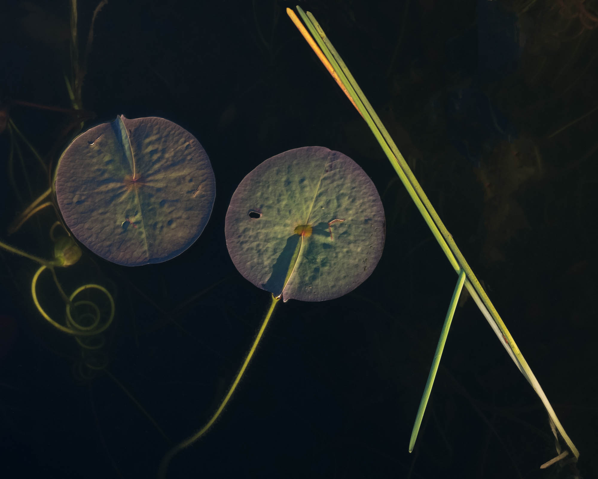untitled shoot--5-EditJane Fulton Alt_ Water Lilies.jpg