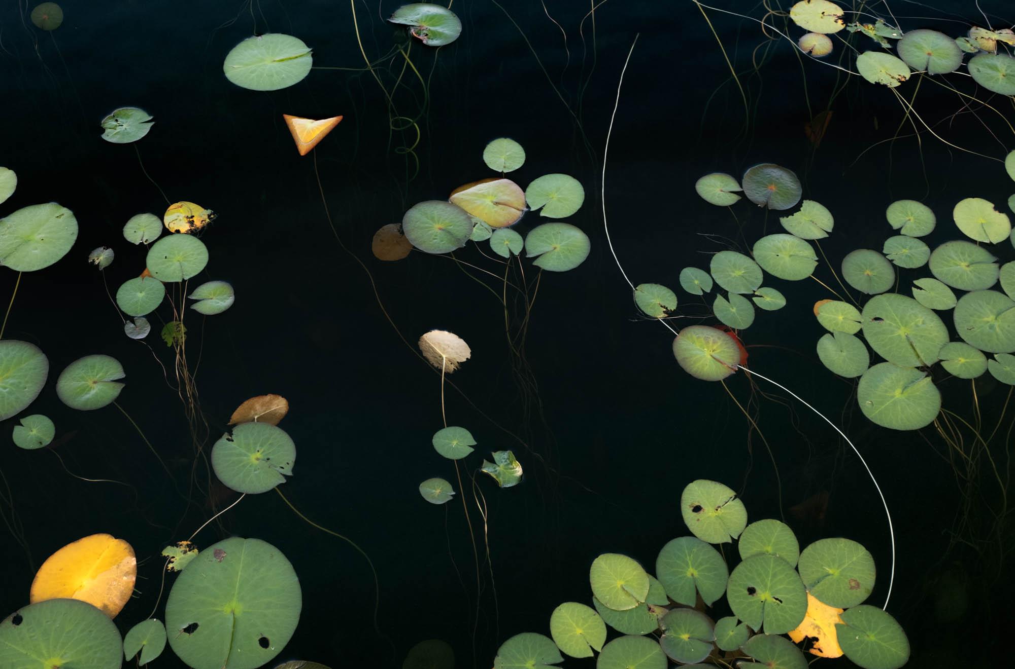 untitled shoot-8236Jane Fulton Alt_ Water Lilies.jpg