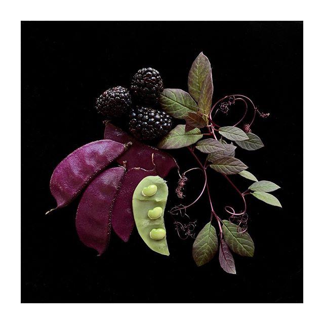 Autumn Harvest  #gardendelights #purple #naturesgifts