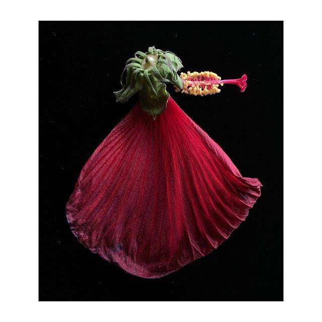 Oohhhhh LaLa! #gardendelights #autumharvest #red