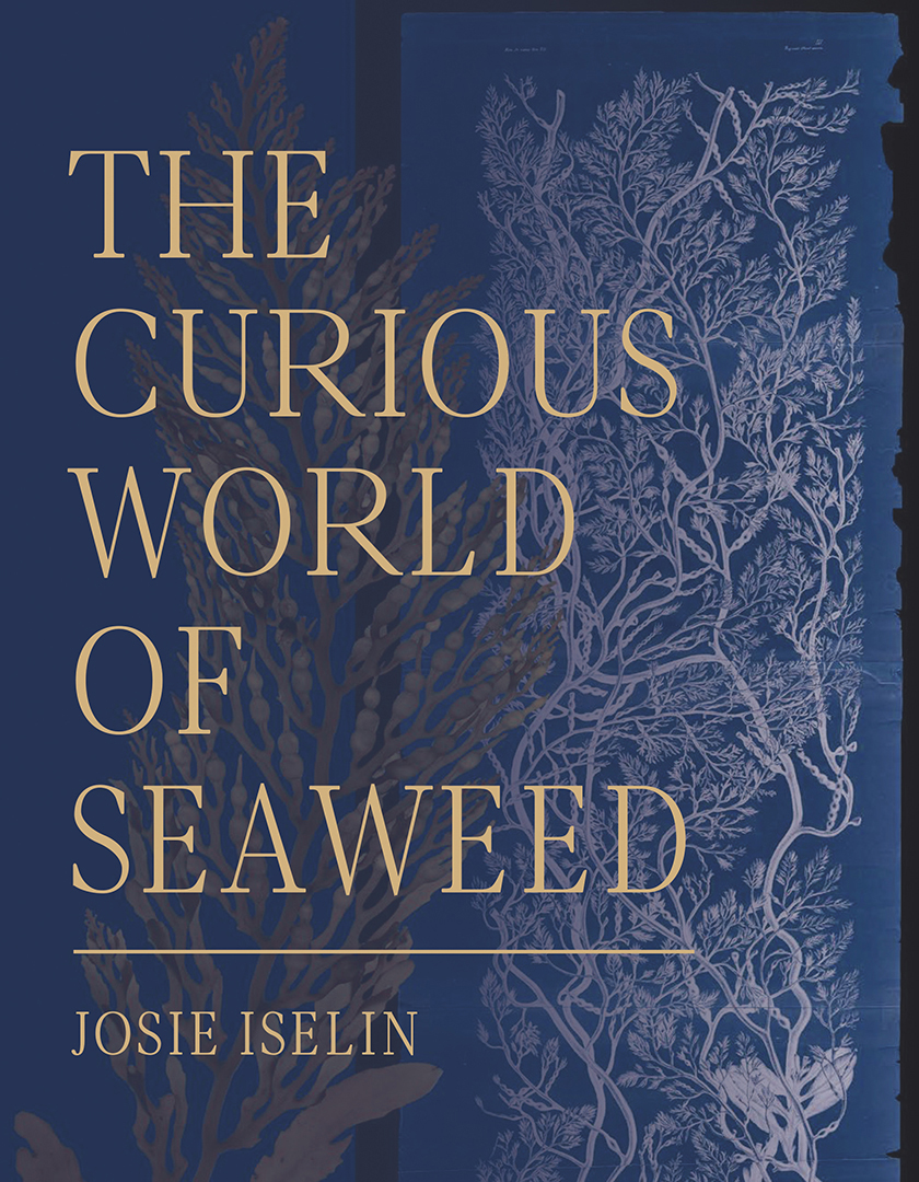 The Curious World of Seaweed cover
