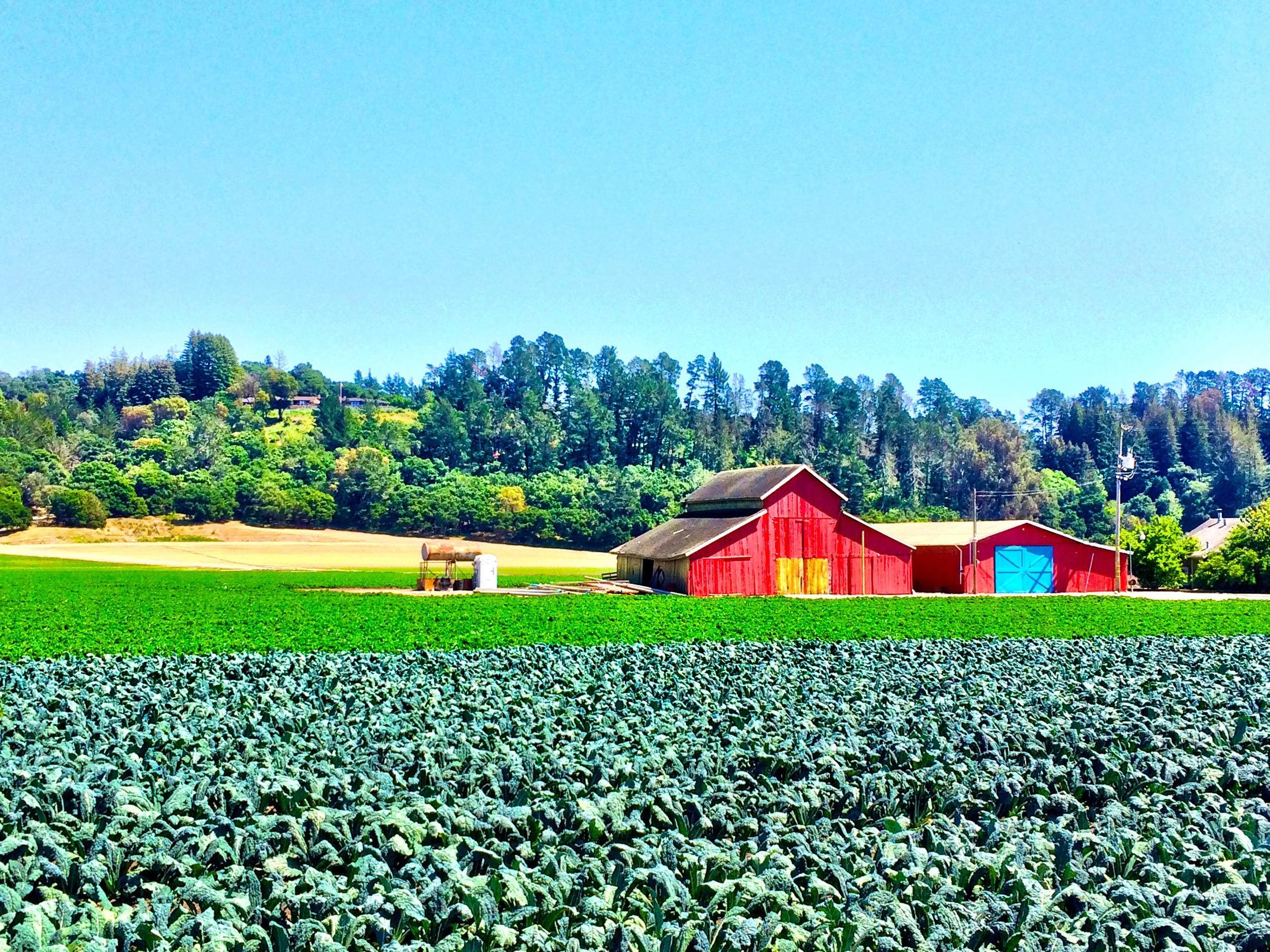 Watsonville, CA