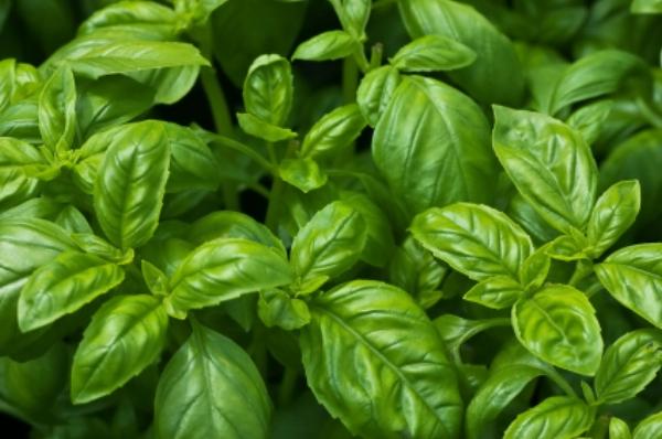 Creamy Pea Pesto Pasta | Savoury Recipes | Sproutly Stories
