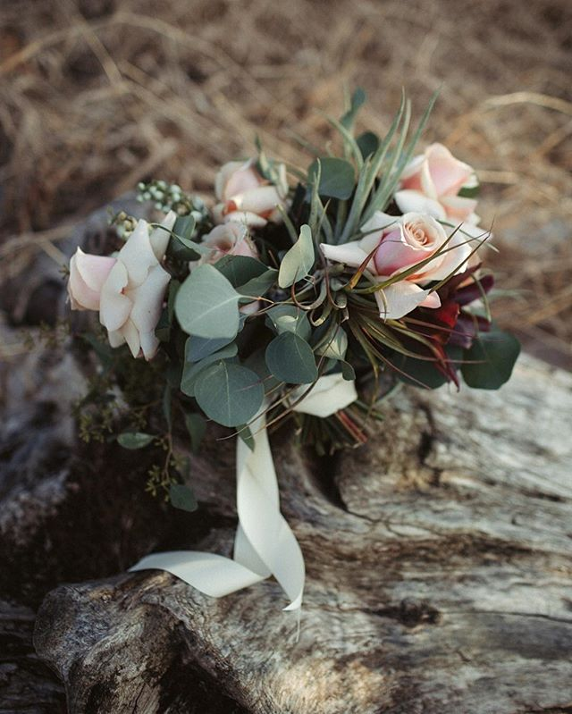 For Kaitlin + Eric's lakeside elopement, Erin created a bouquet using fragrant roses, air plants, eucalyptus, and larkspur.  Photography - @822_weddings  Flowers- @nectarandroot  Planning - @littlebranchevents