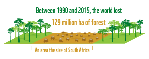 According to FAO's Global Forest Resources Assessment 2015, since 1990, the world has lost approximately 129 million hectares of forest, which is an area almost as big as South Africa.