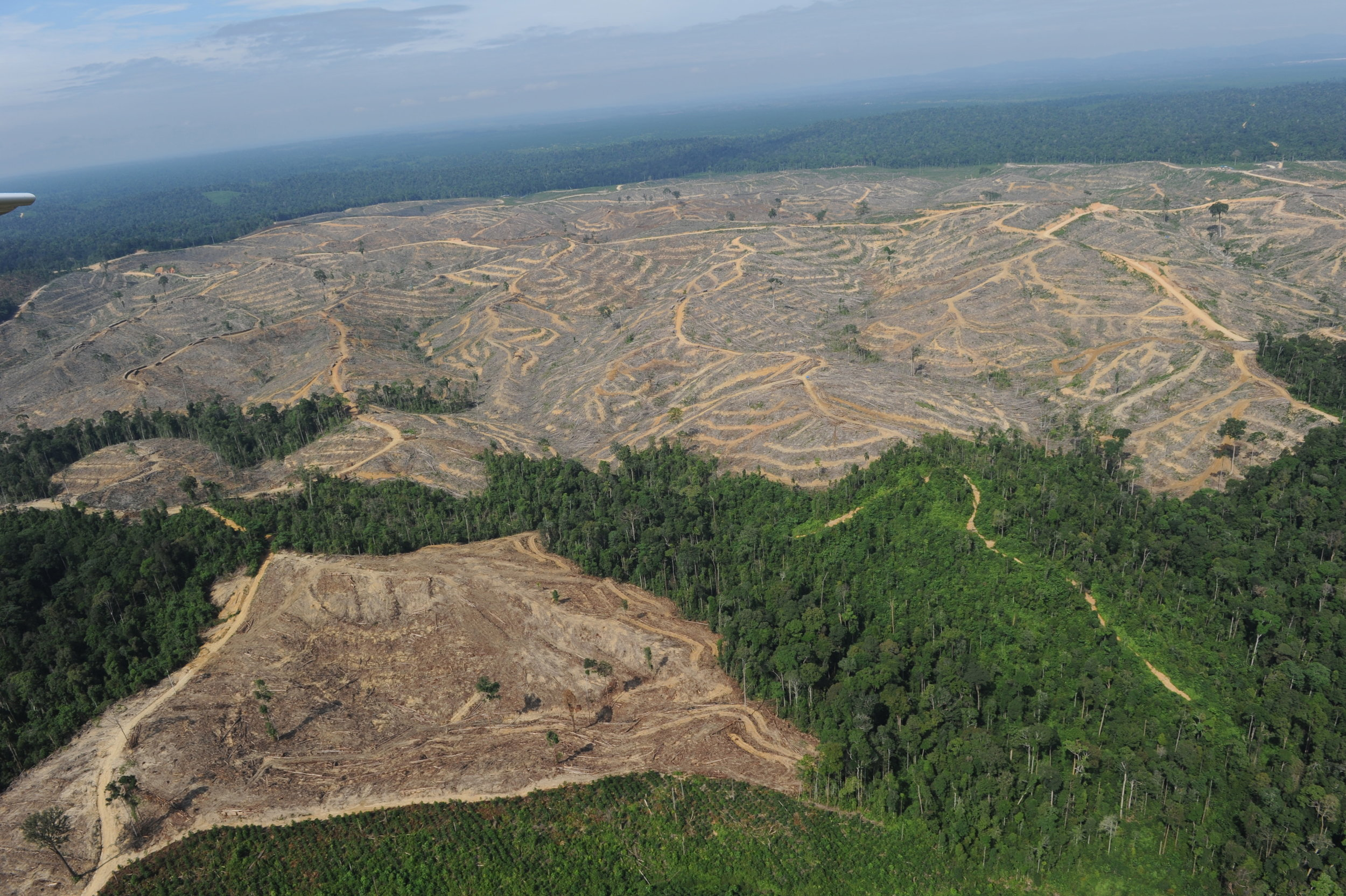 IN THE PAST 30 YEARS, OVER 50% OF THE EARTH'S ORIGINAL FOREST COVER HAS BEEN DESTROYED FOR HUMAN PRODUCTS.