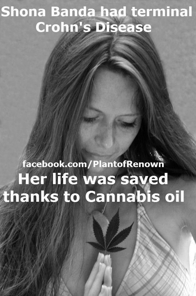 cannabis-oil-and-chrons-disease.jpg