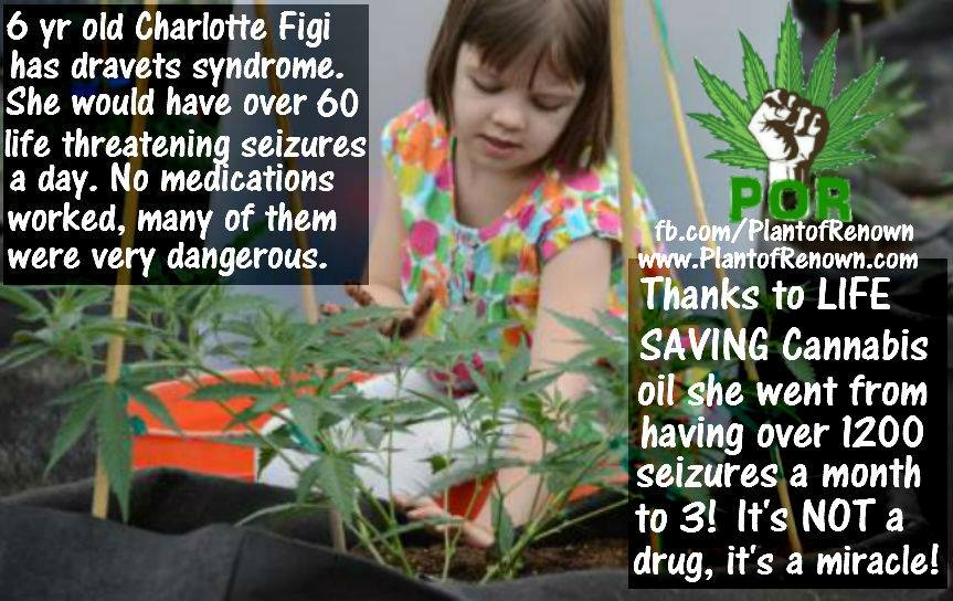 cannabis-oil-cures-dravets-syndrome.jpg