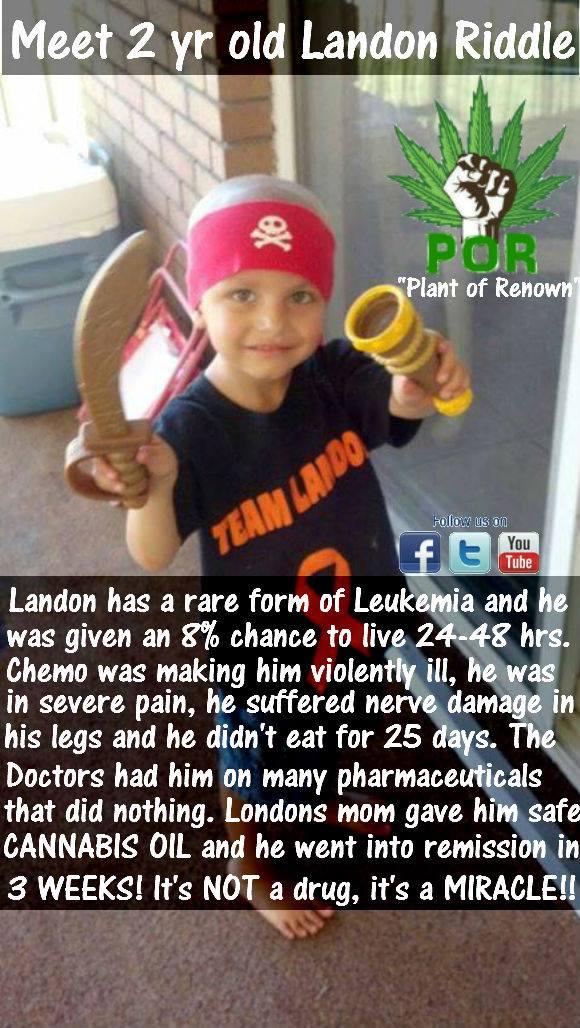 cannabis-oil-cures-leukemia-2.jpg
