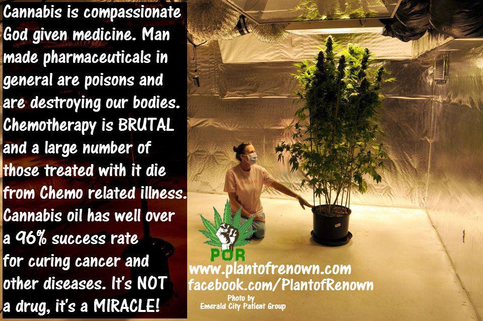 cannabis-oil-success-rate.jpg