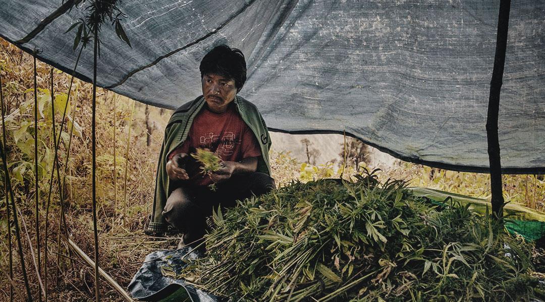 cannabis-prohibition-blog-cover.jpg