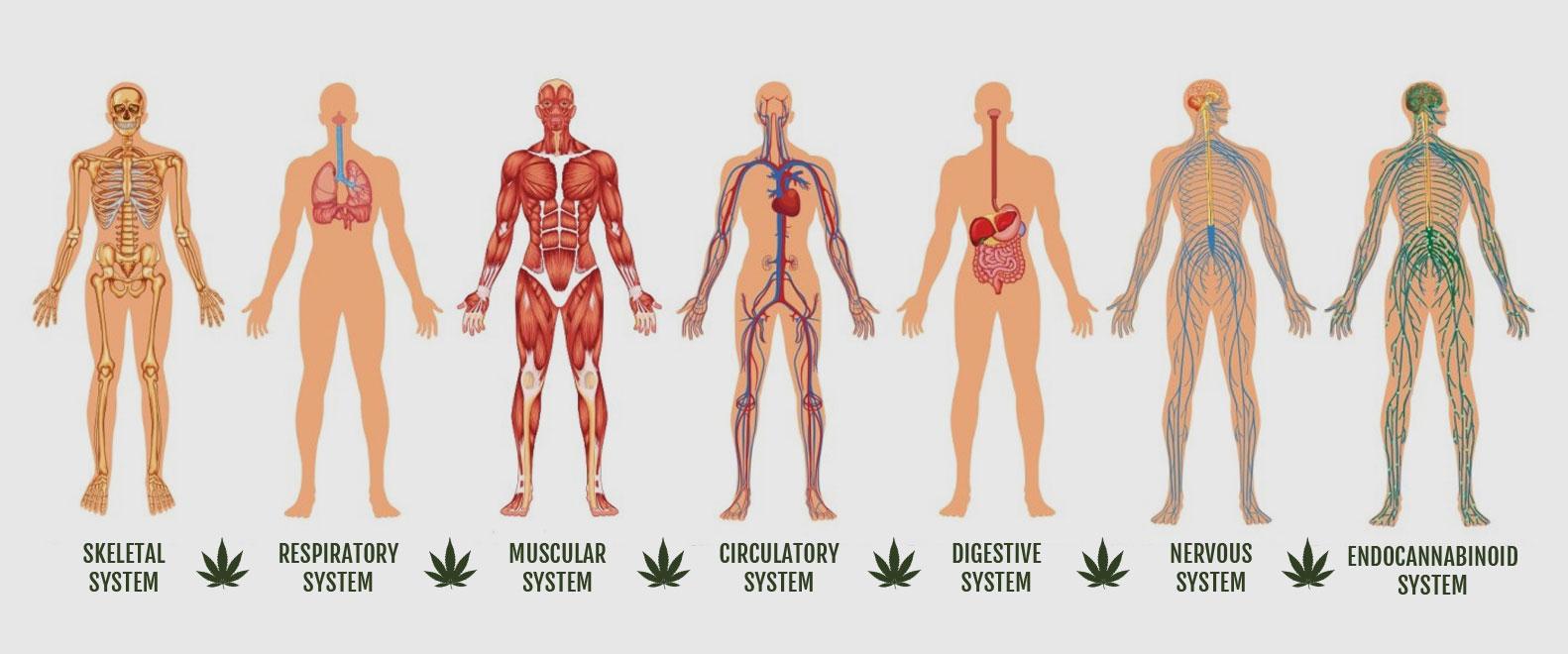 cannabis101-effects-2.jpg
