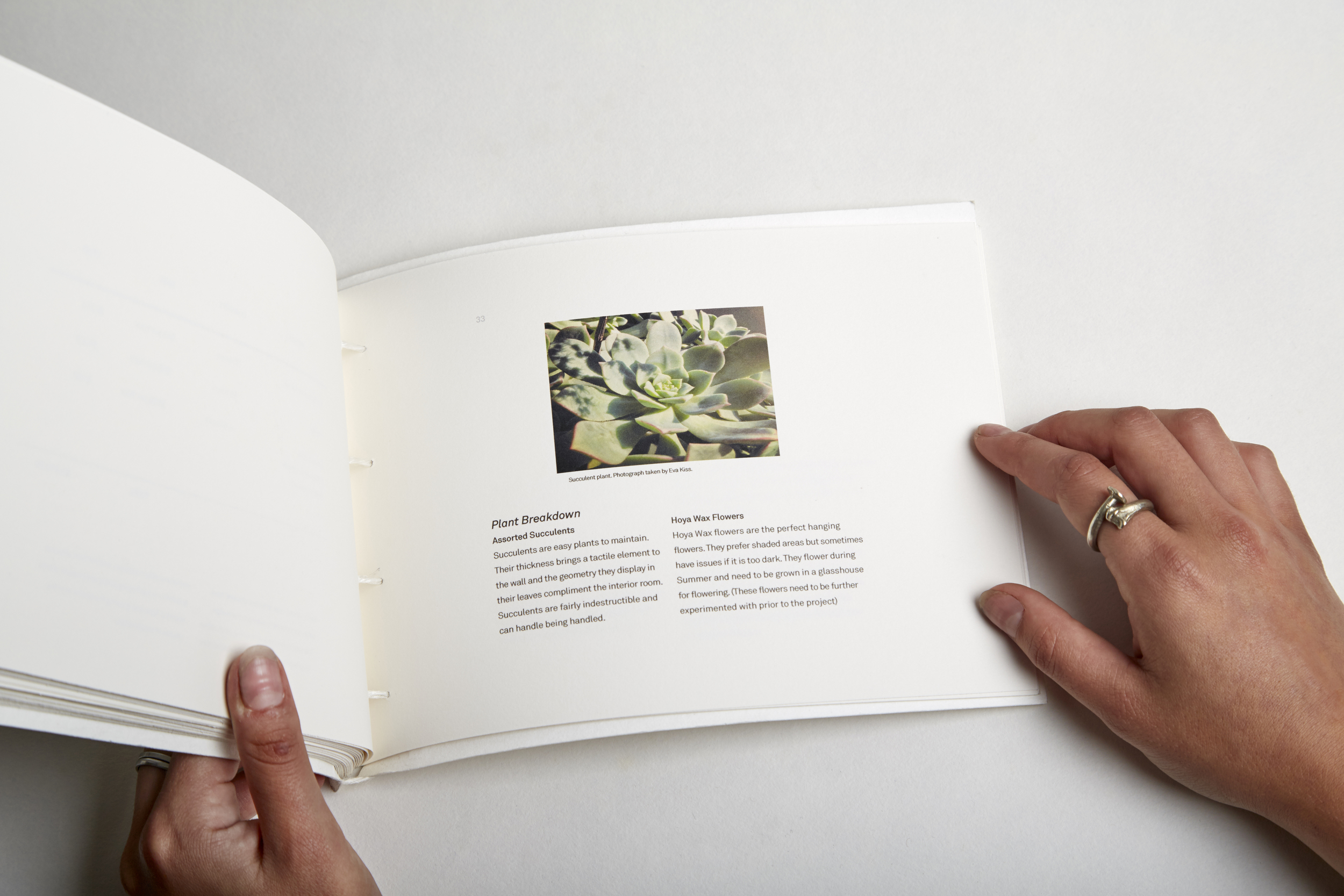Enso Plant page.jpg