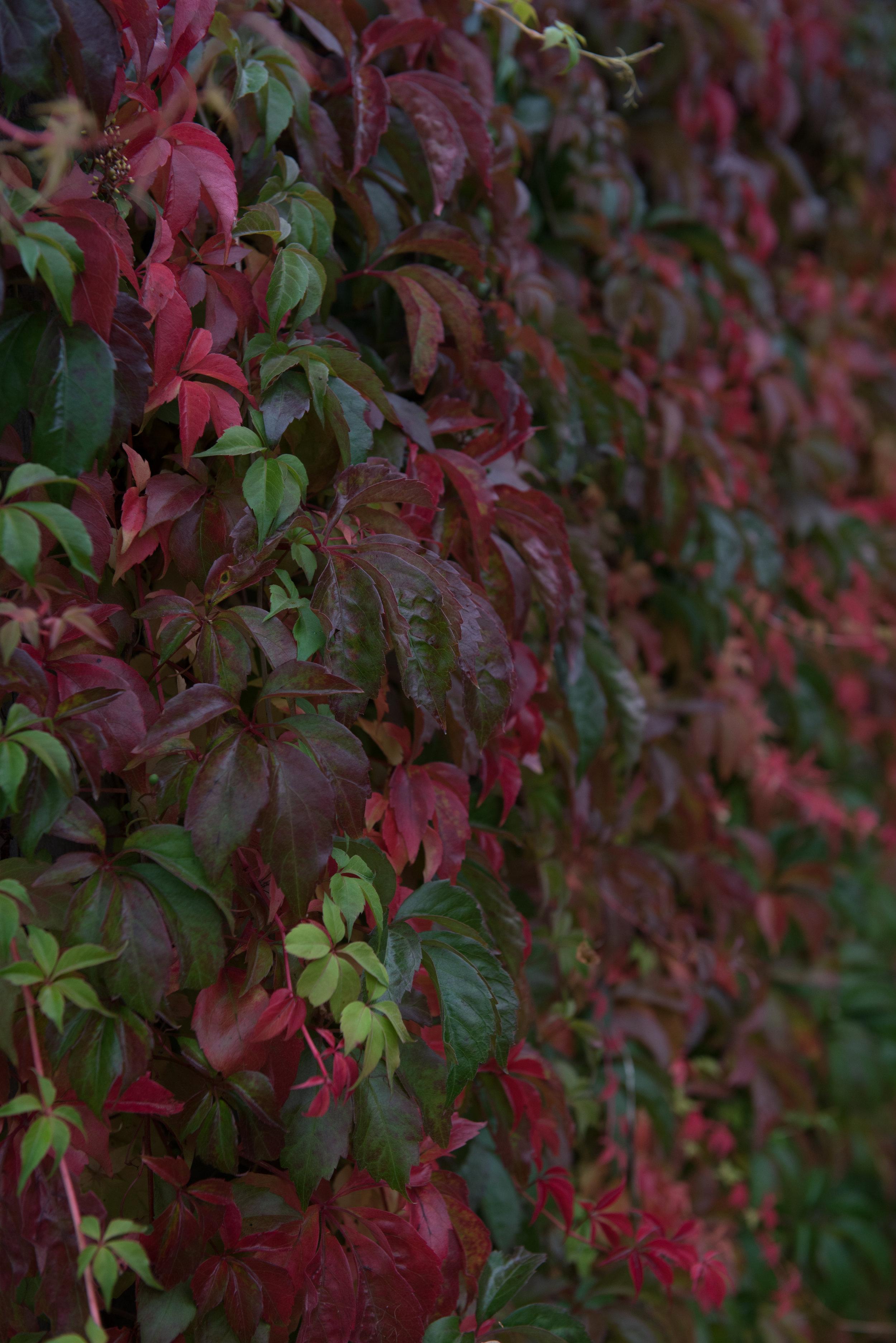 Lottas trädgård (1 of 23).jpg