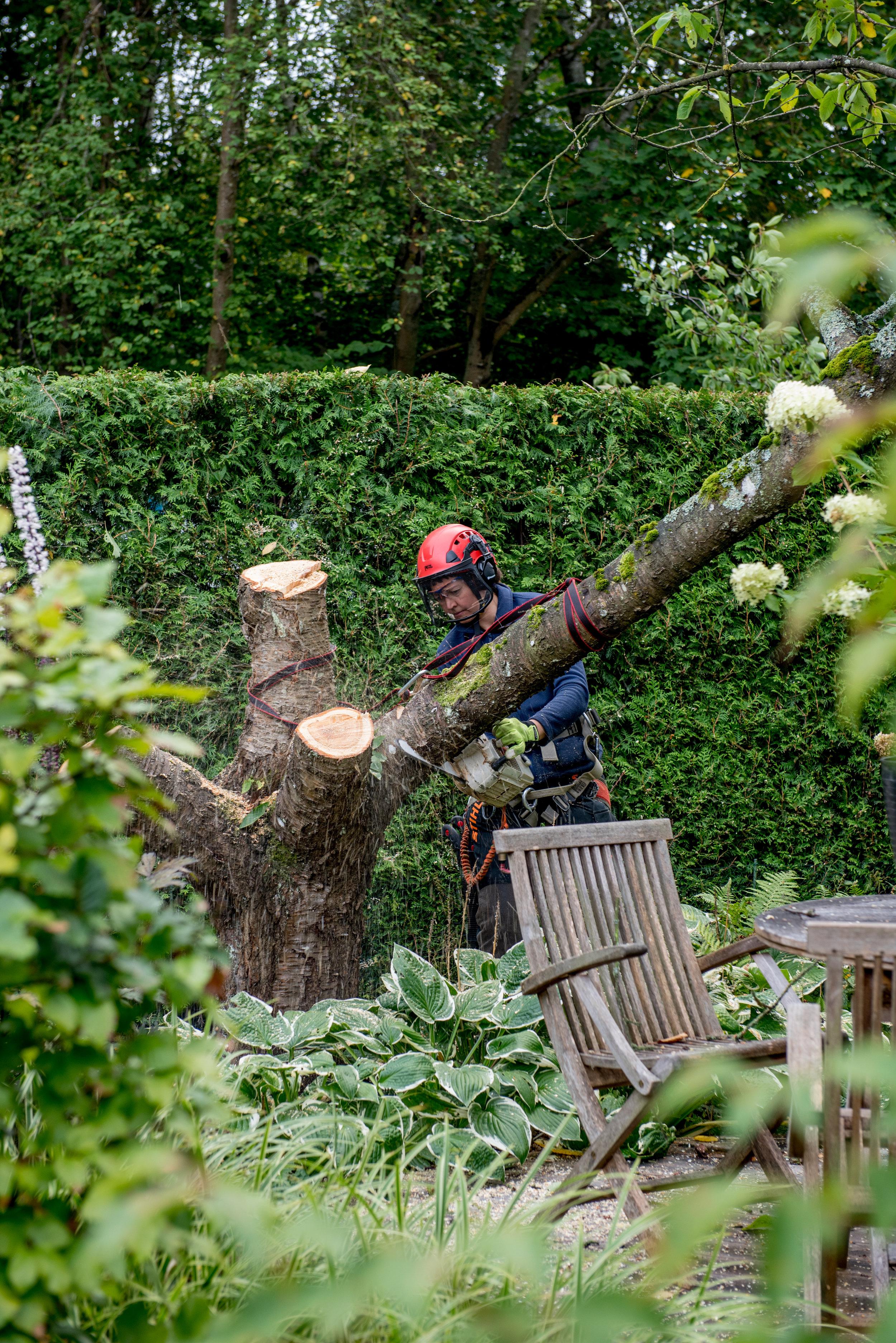 Träd (6 of 9).jpg