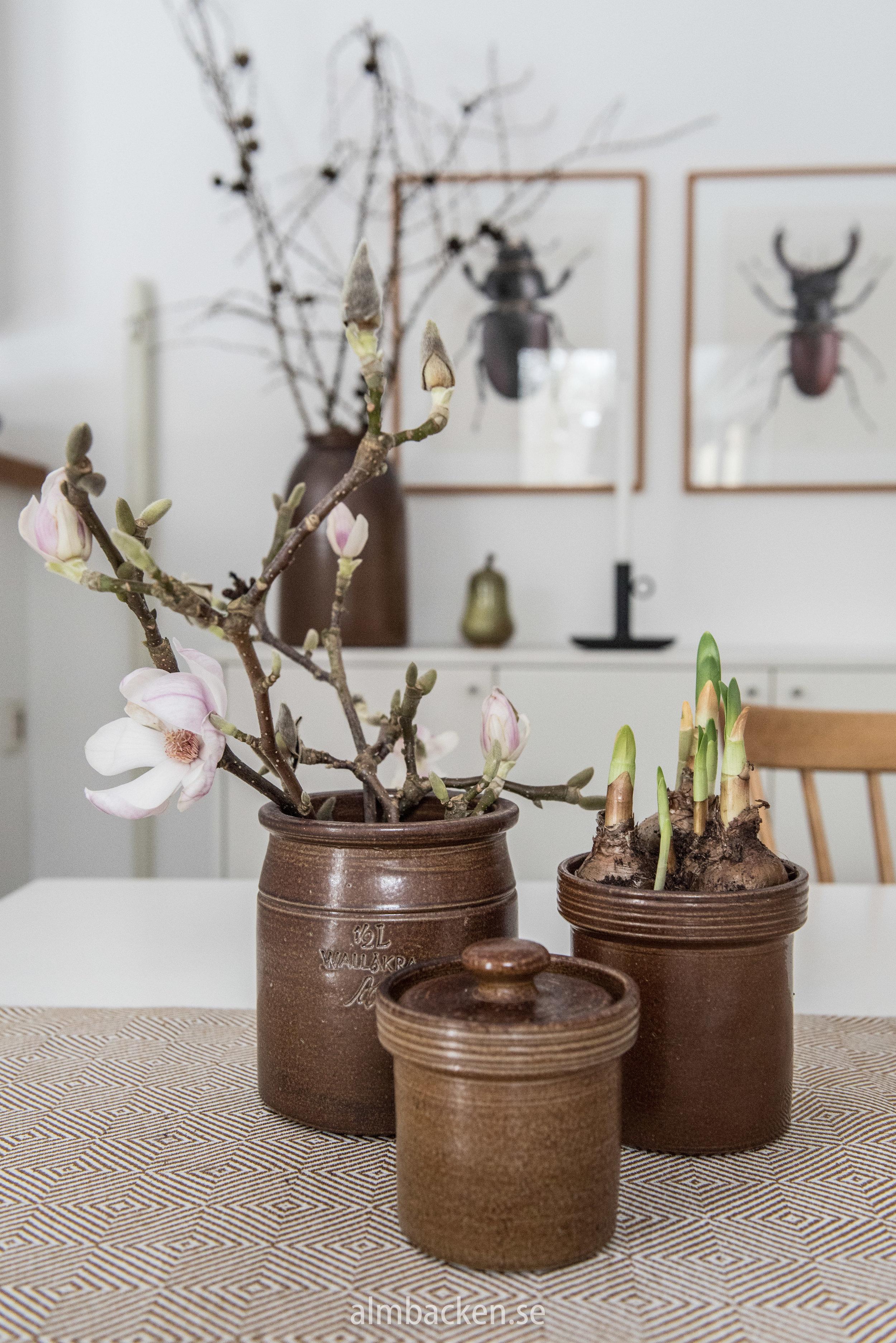 Magnolia-wallåkra.jpg