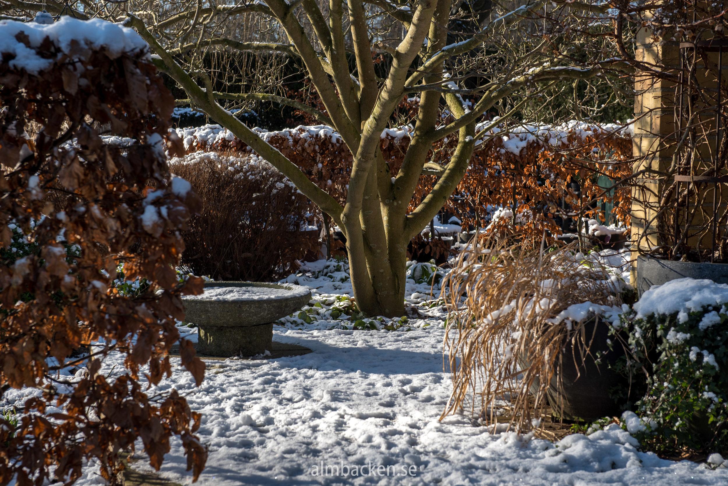 Almbacken-magnolia-bokhäck-4.jpg