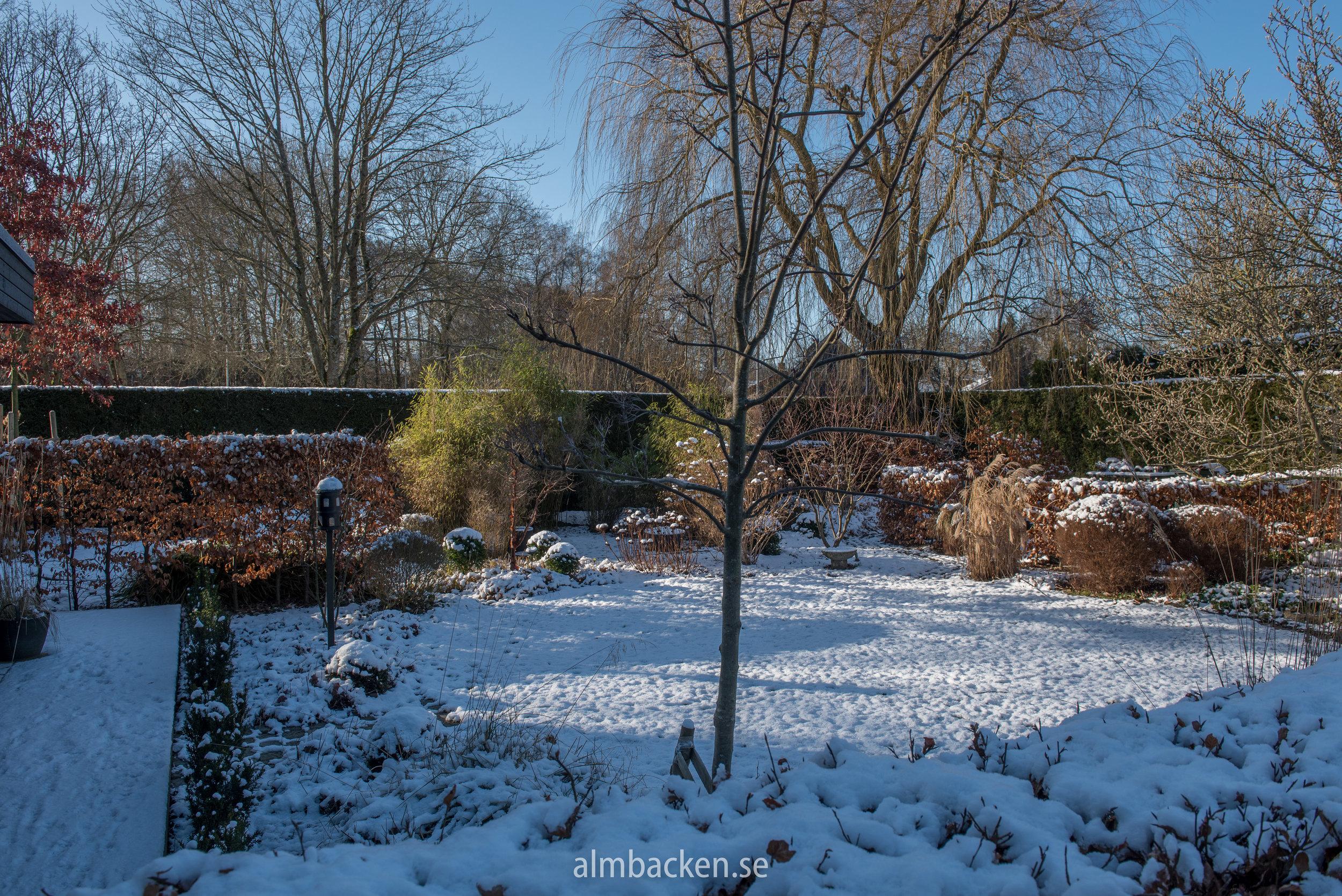 Almbacken-magnolia-bambu-kopparlönn-ullungrönn-schalrakansek6.jpg