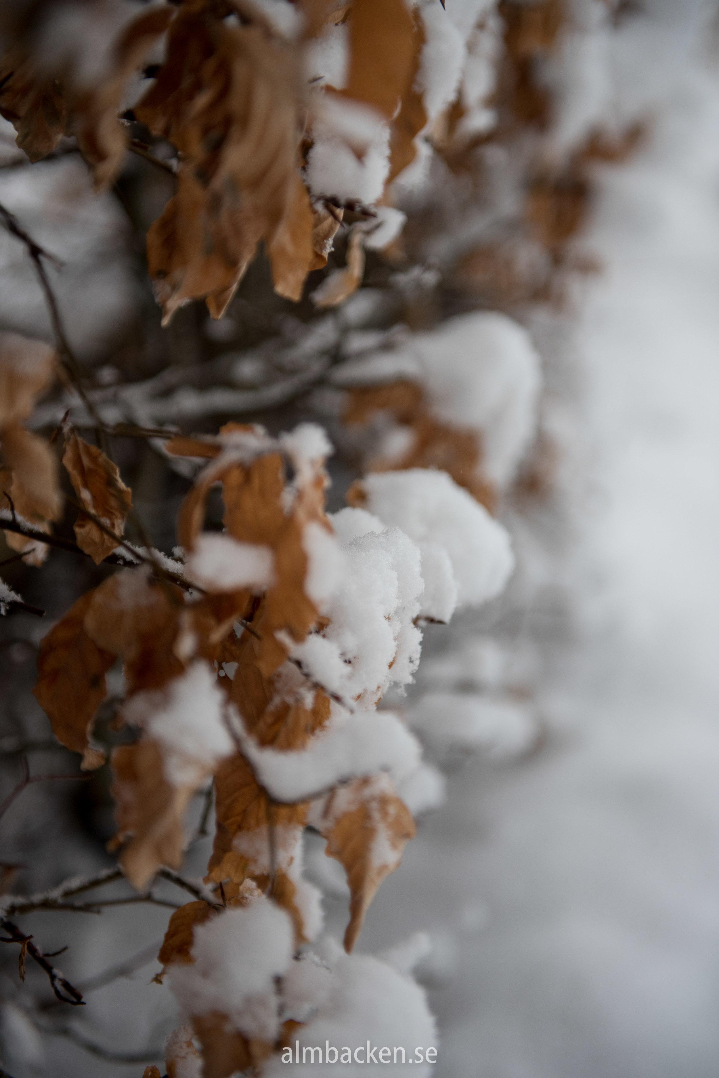 Wintergarden-5.jpg