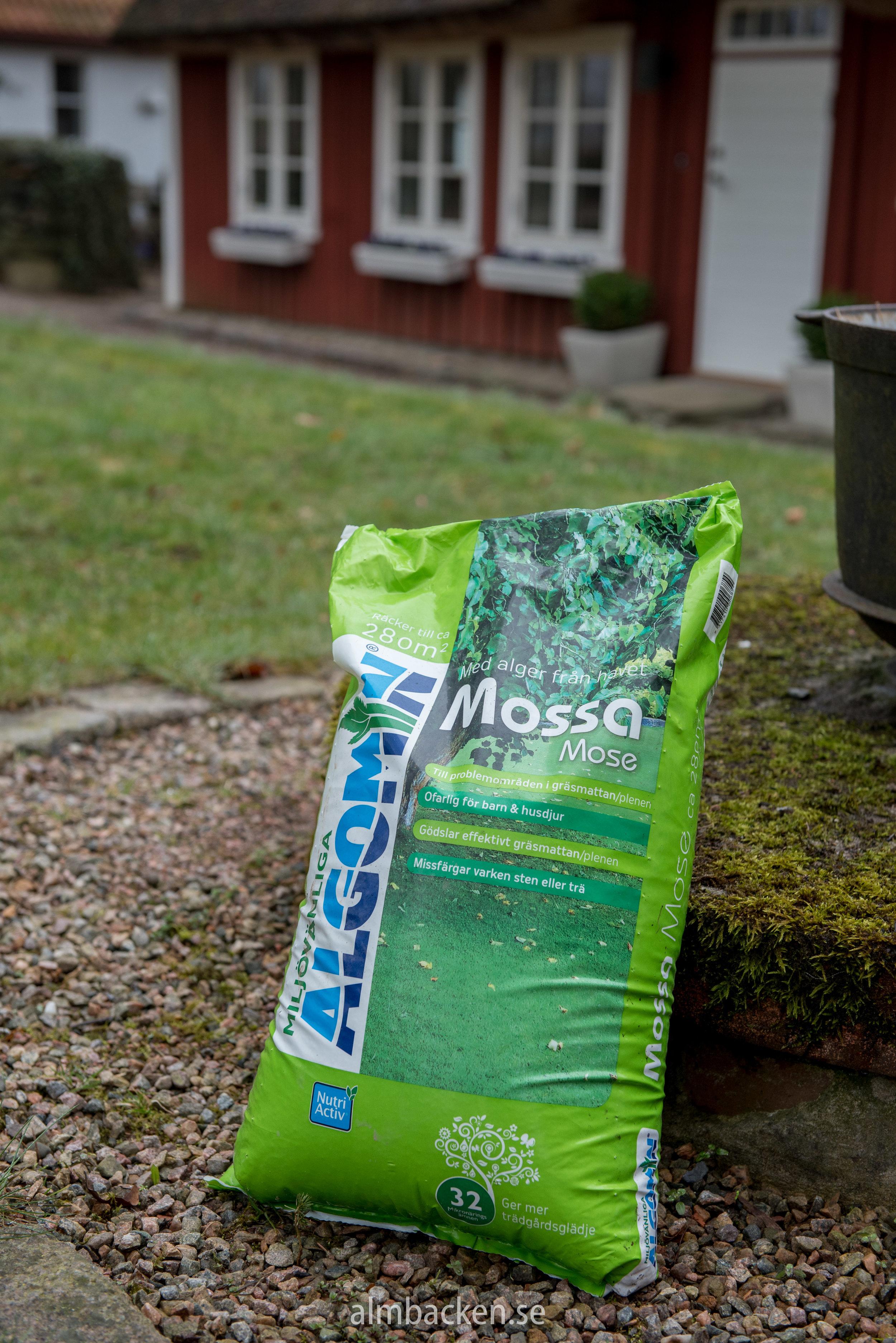 Algomin-Mossa-problem-gräsmatta.jpg