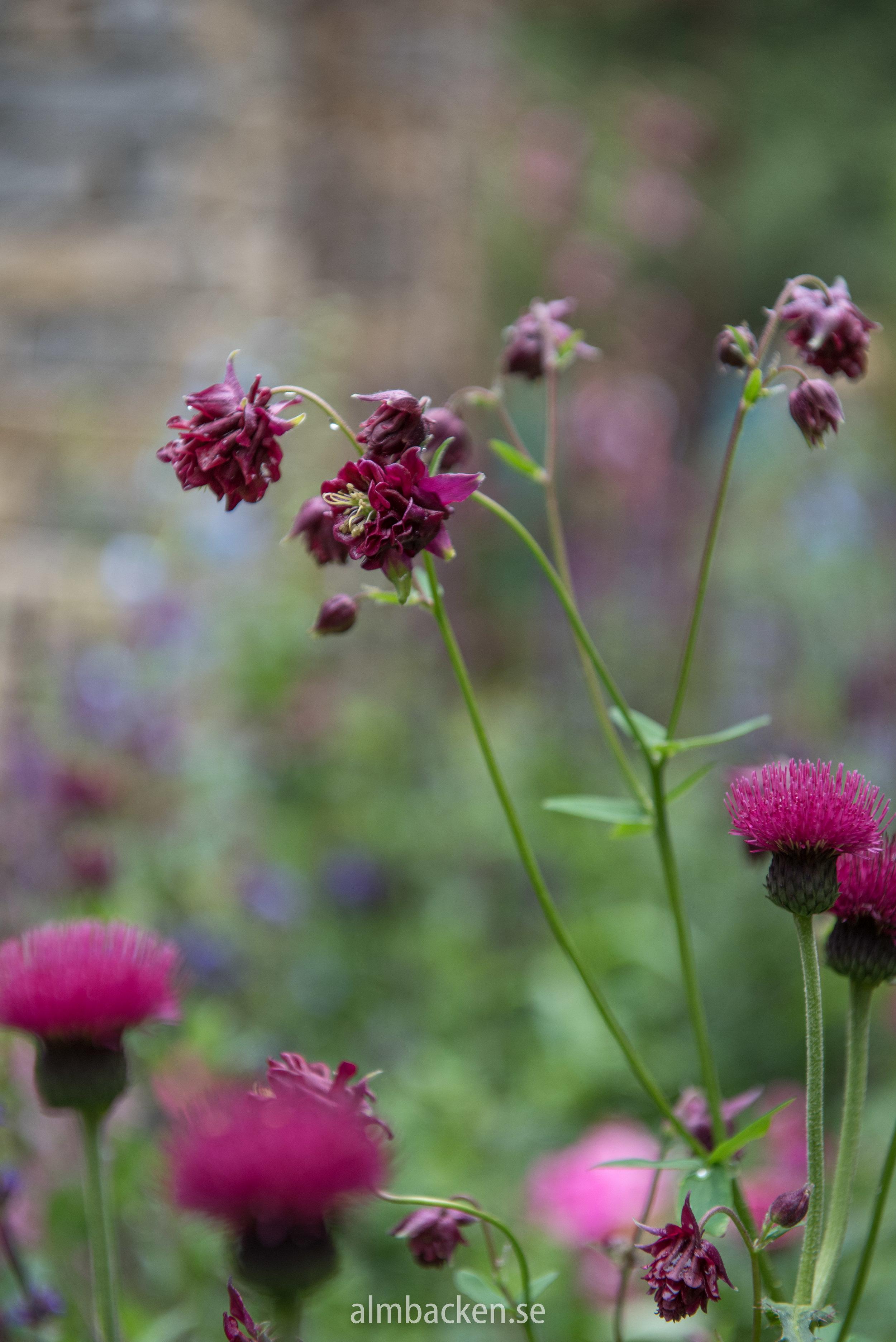CFS-2018-chleseaflowershow-the-very-english-gardenjpg