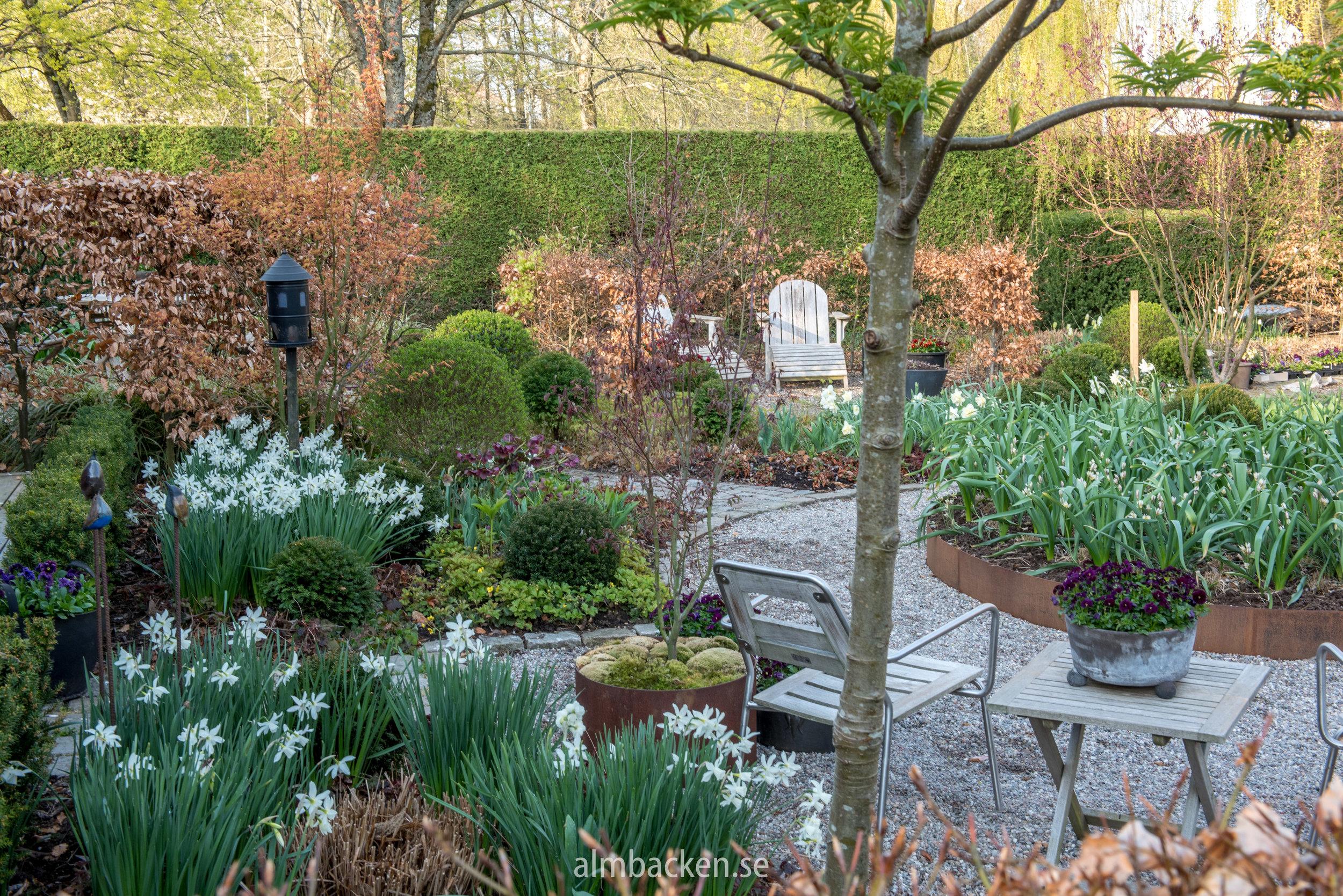 Narcissus-thalia-almbacken-tradgardsdesign-corten.jpg