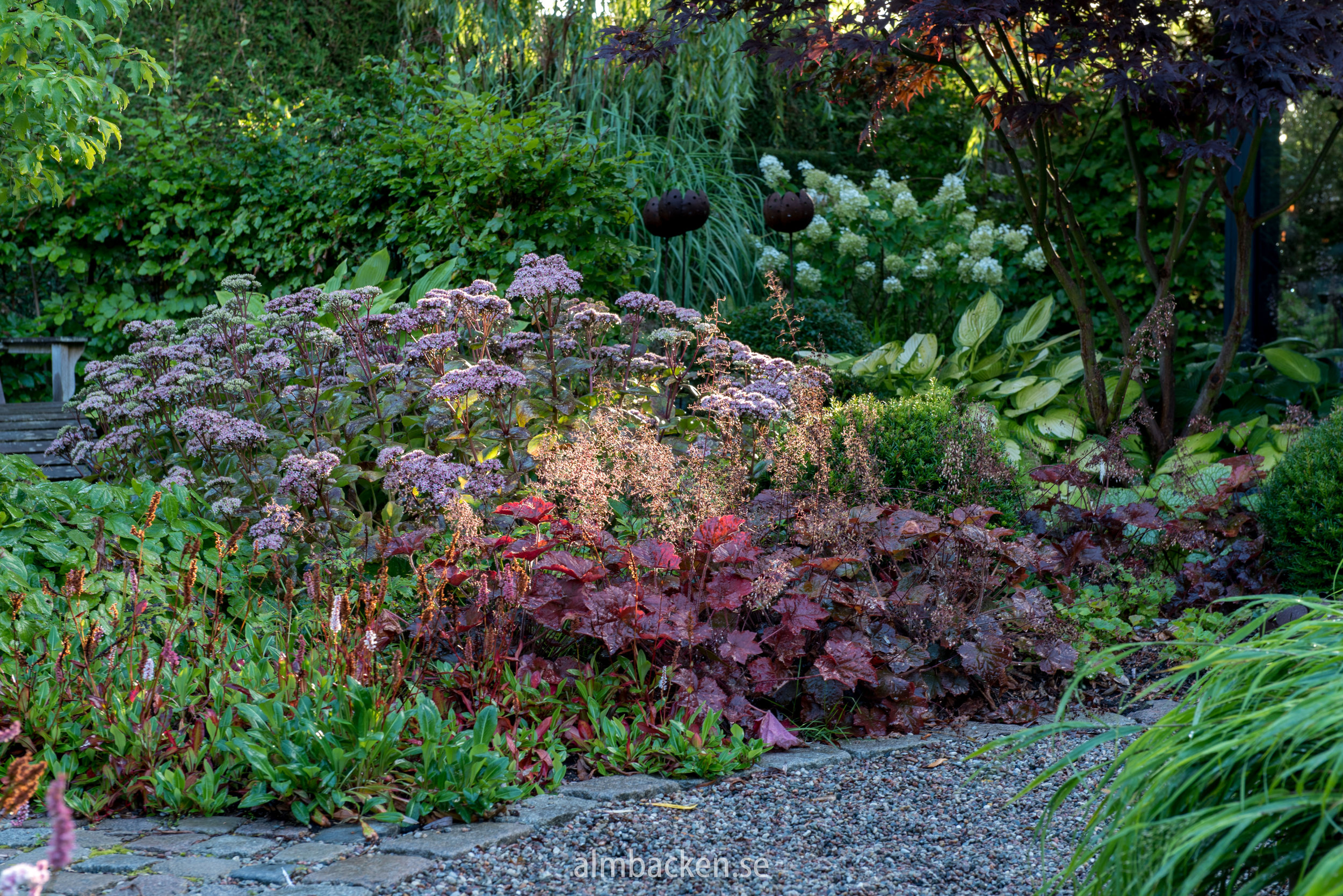 Bistorta affinis 'Darjeeling red', Heuchera Palace Purple' and Hylotelphium telephium 'Matrona'
