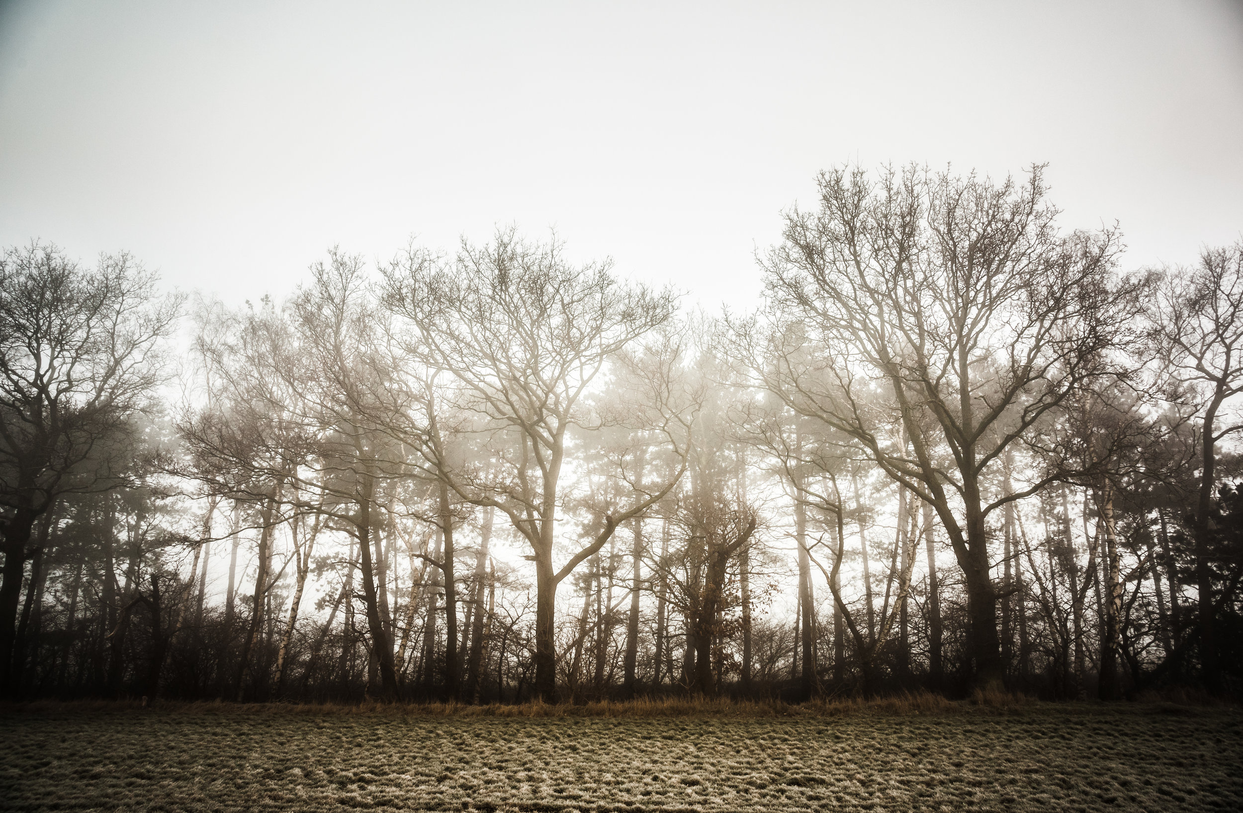 Mysterious Trees