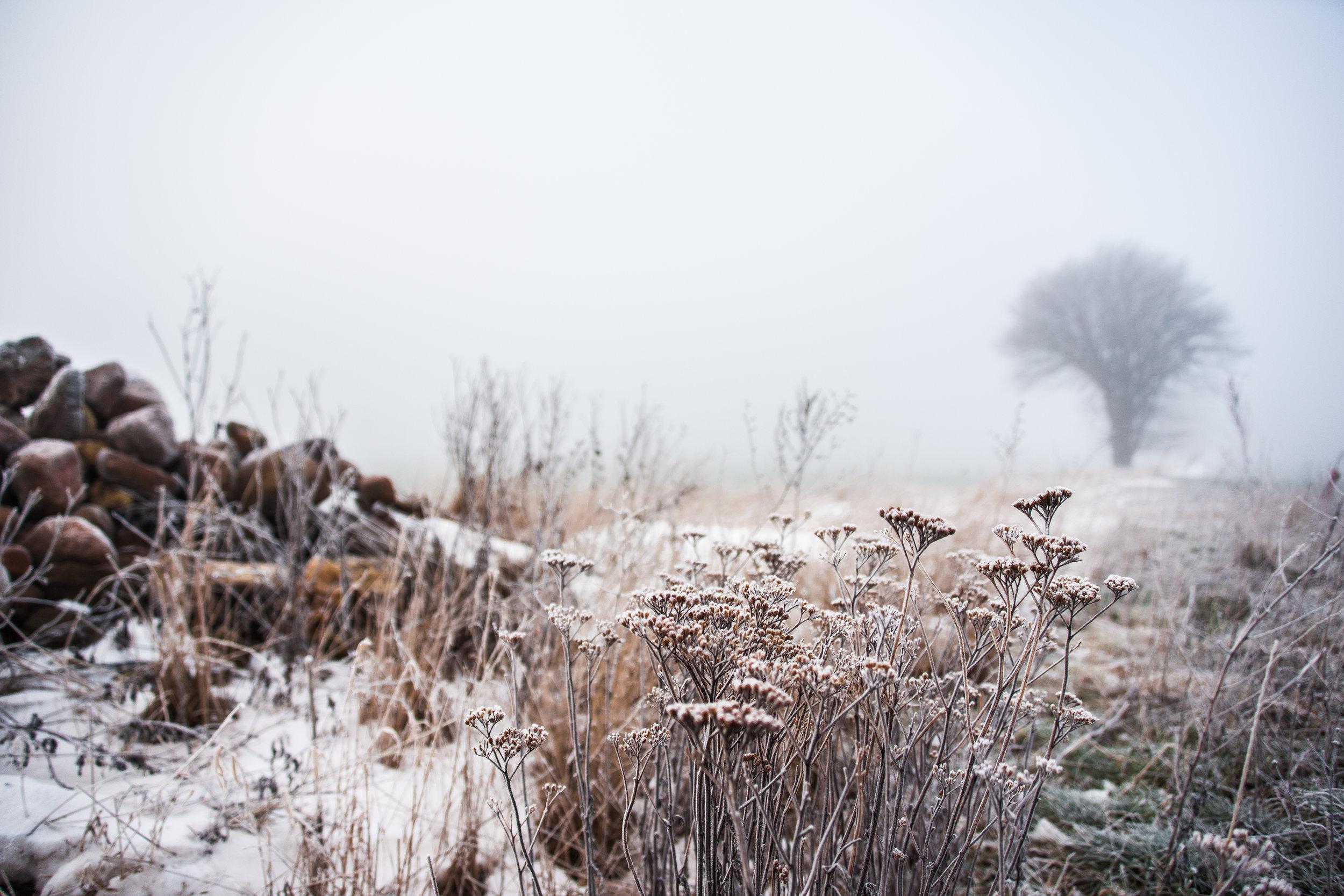 Stone Tree & Fog