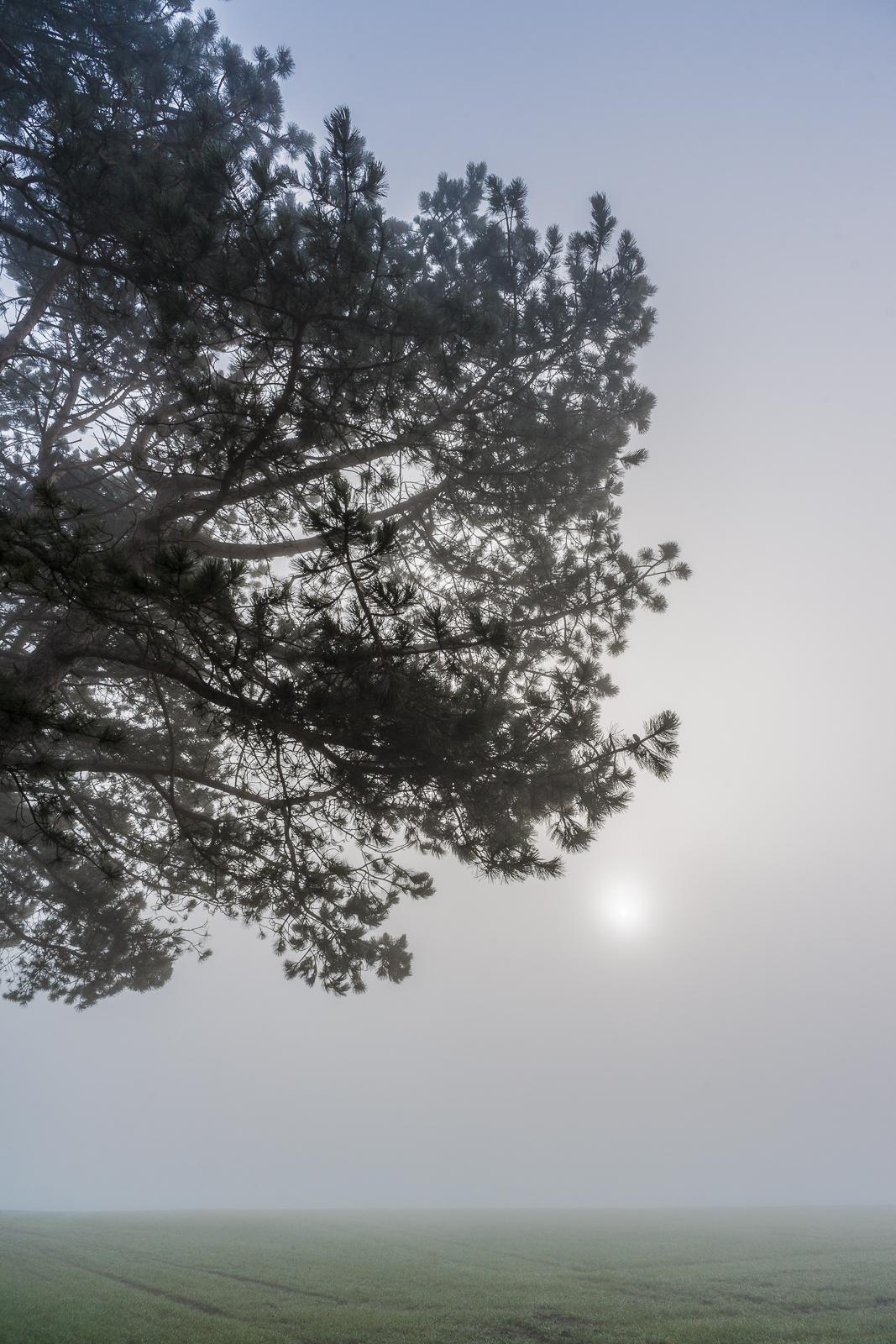 Fog Like Porridge