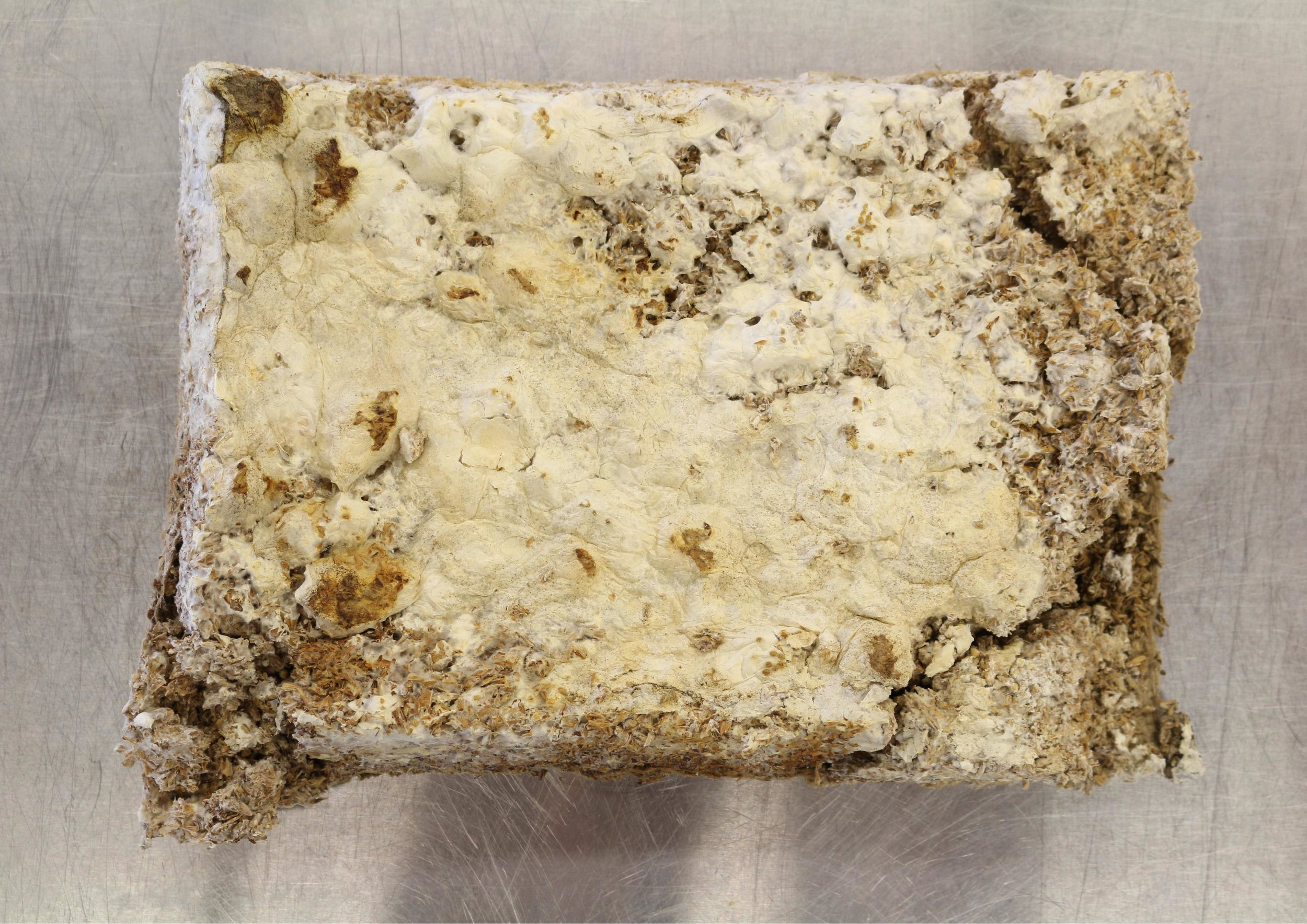 Early prototype: Insulation panel made from waste beer grain and mycelium spawn