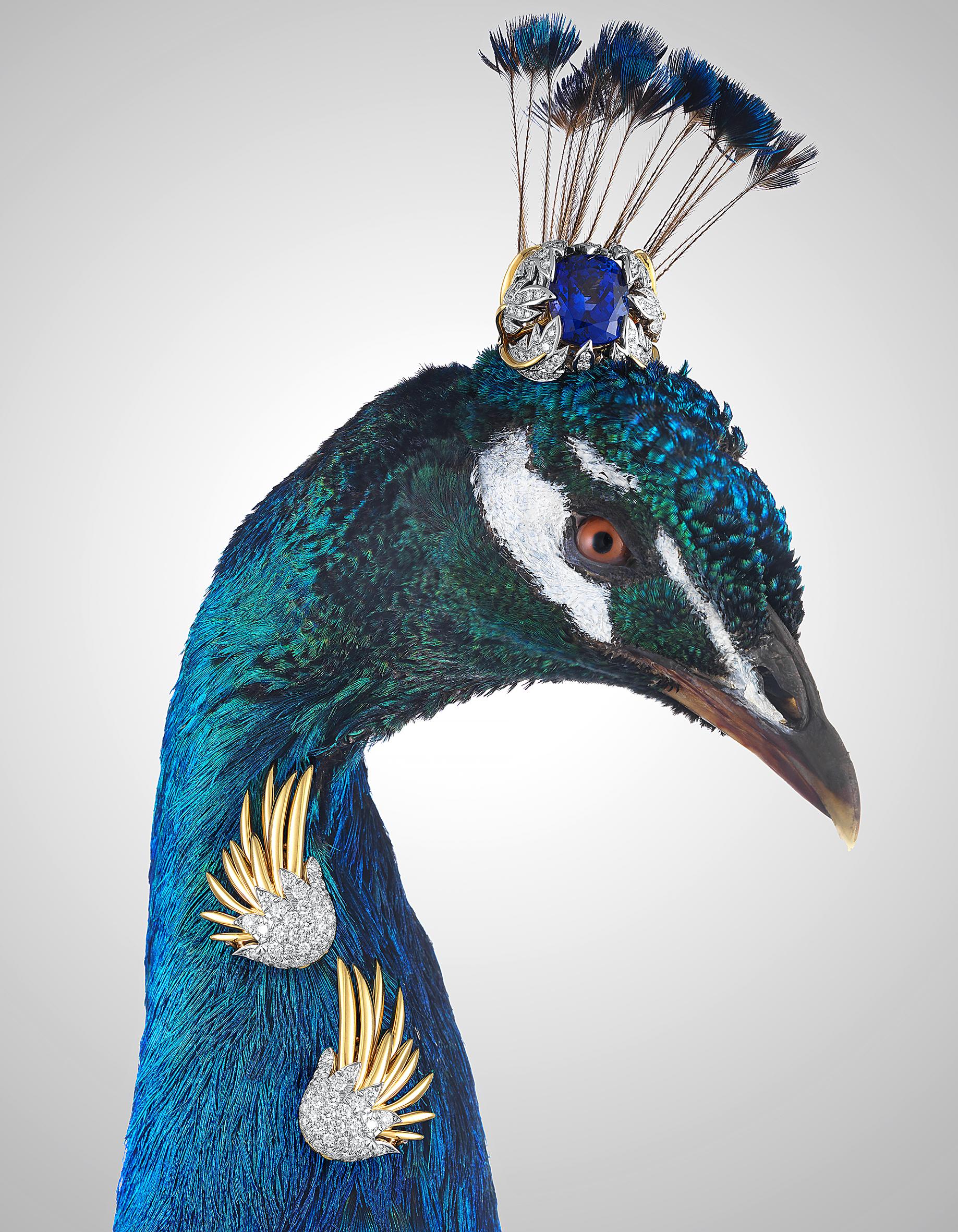 High Jewellery-peacock.jpg