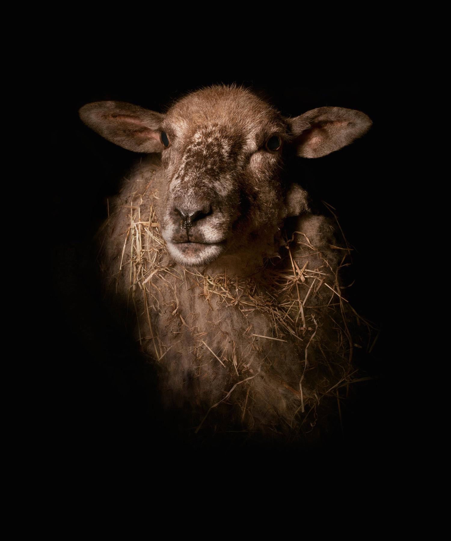 Lamb_2.jpg