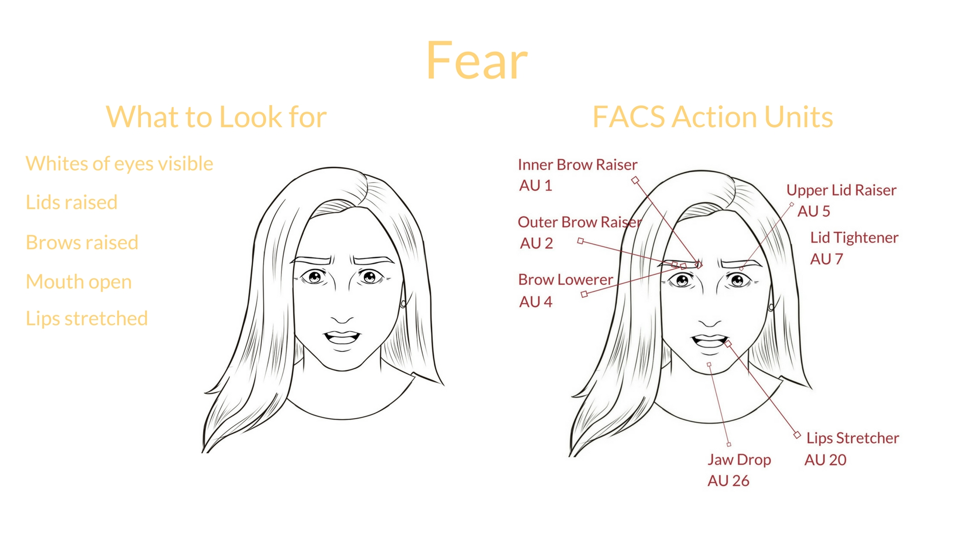 Universal Expression Fear