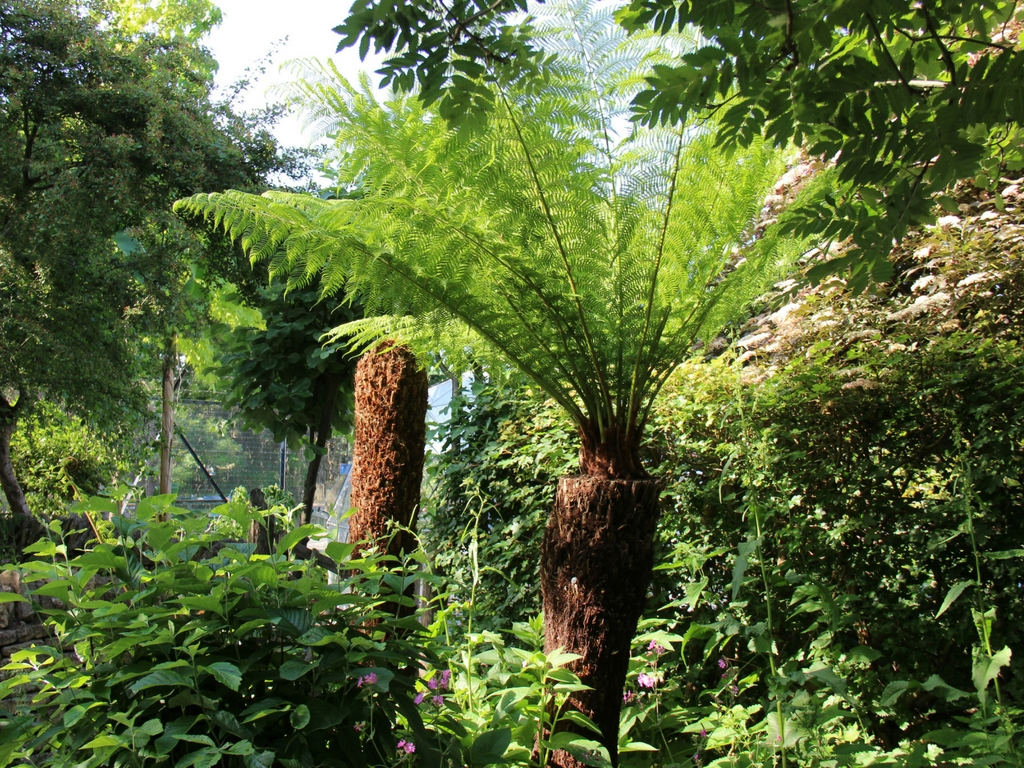 Fern in wildlife area - May 17.jpg