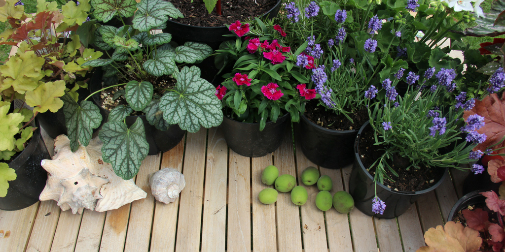 Introduction to Gardening -