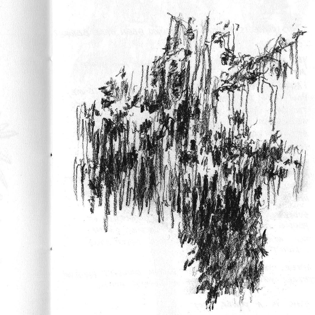 Book+of+trees+.jpg