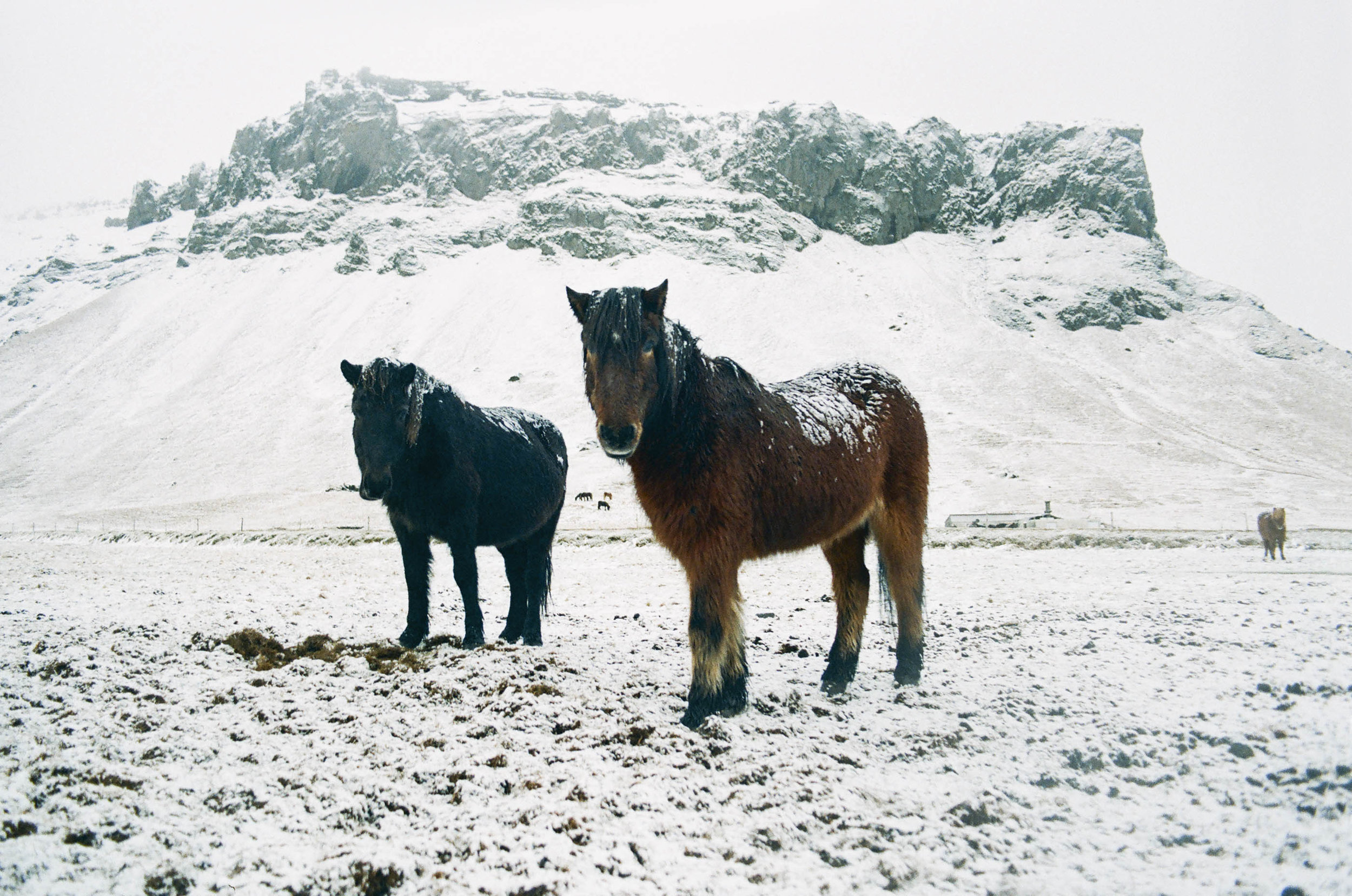 annadosenes-Travel Diary-Glacier-16.jpg