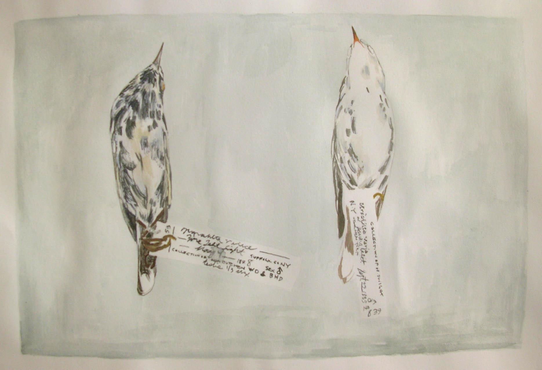 Black and White Warblers.jpg