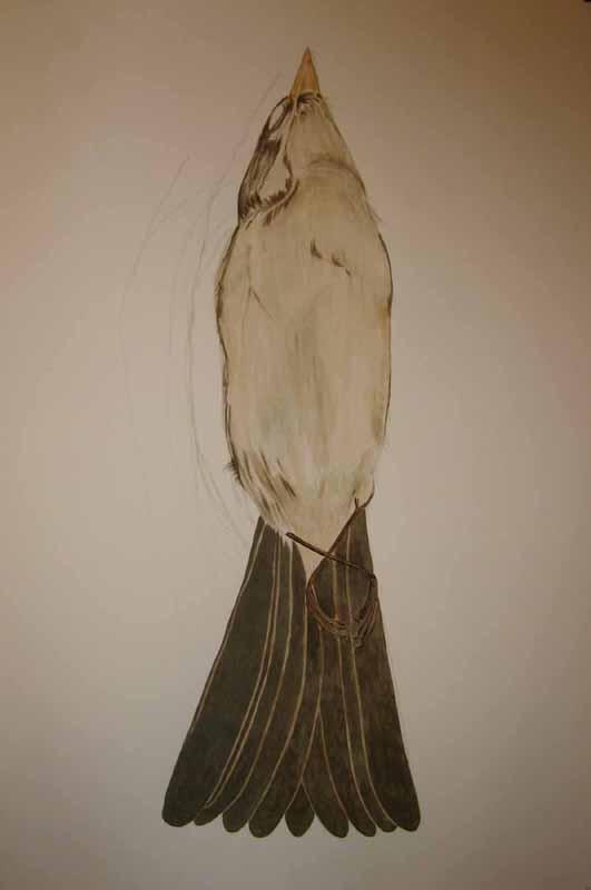 Sparrow Birdskin Watercolor 1.jpg