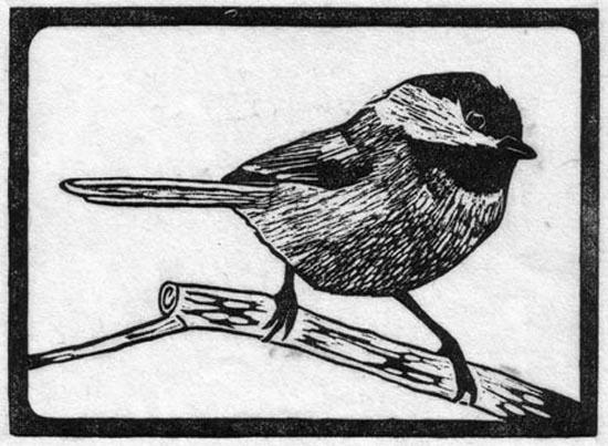Chickadee - Black Capped.jpg