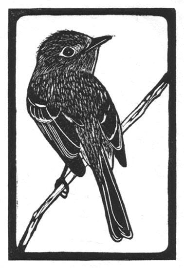 Flycatcher - Pacific Slope.jpg