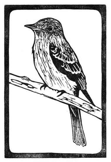 Flycatcher - Pewee - Eastern Wood.jpg