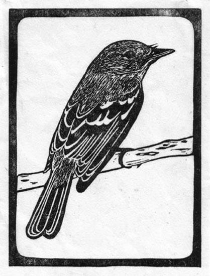 Flycatcher Southwestern - Willow.jpg
